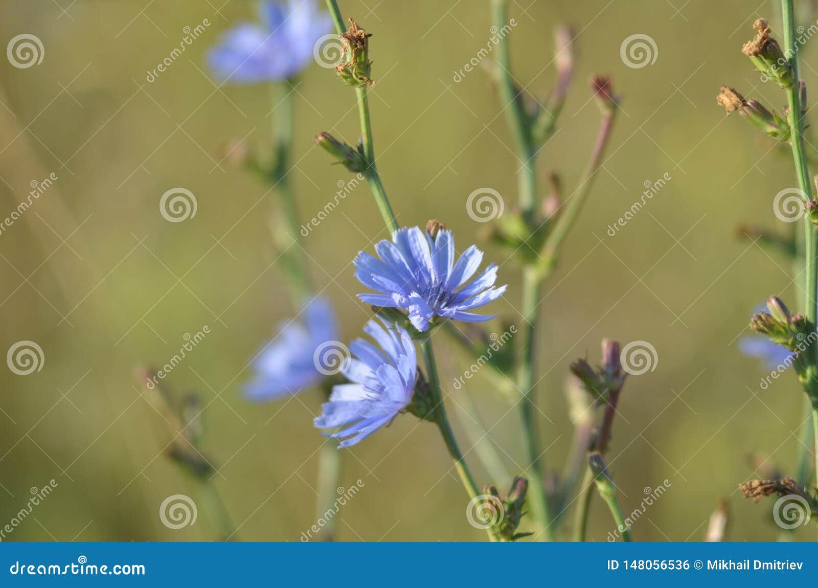 Ιώδες λουλούδι - ένα ουδέτερο υπόβαθρο E Θολωμένη άκρη