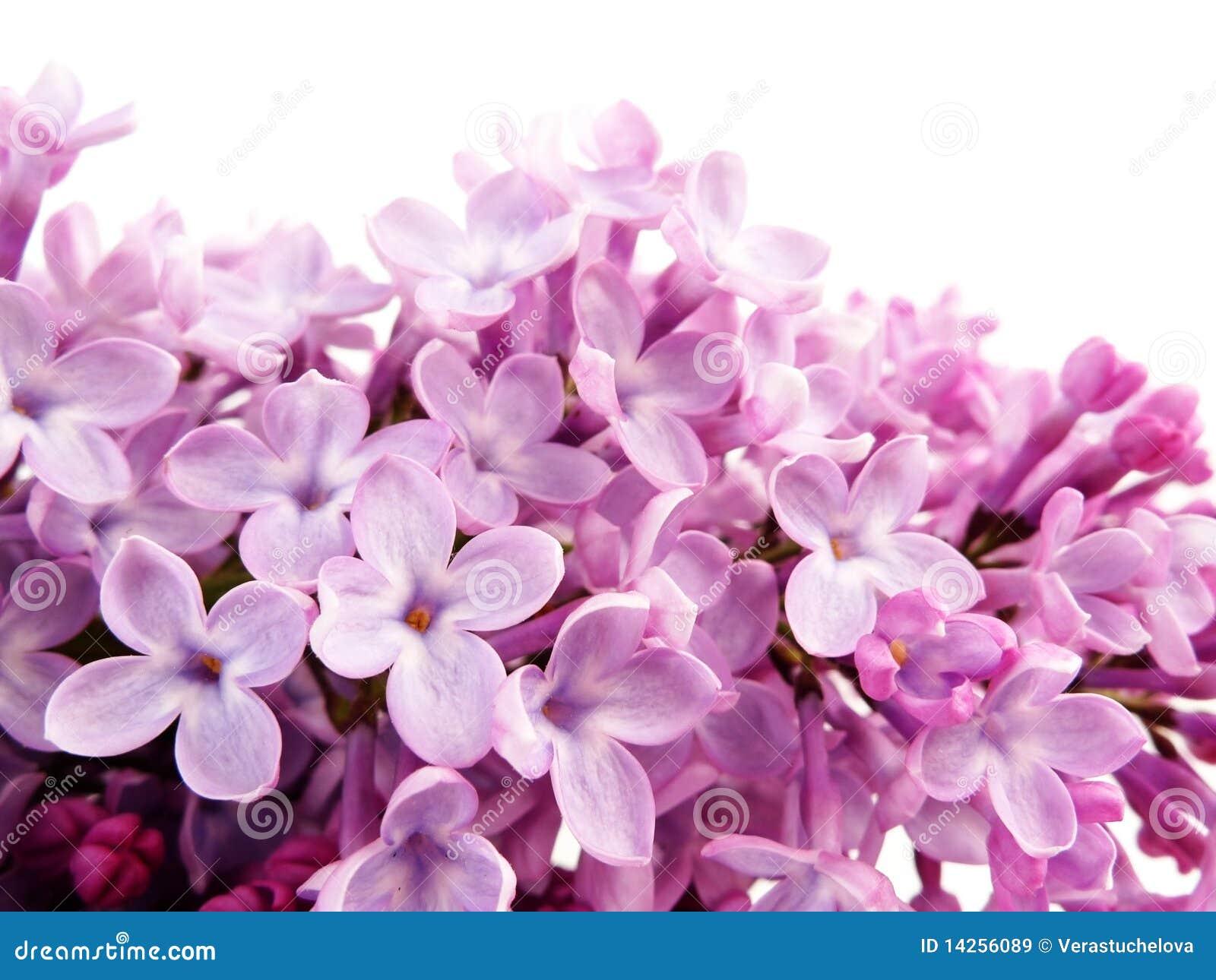 ιώδες μακρο ροζ