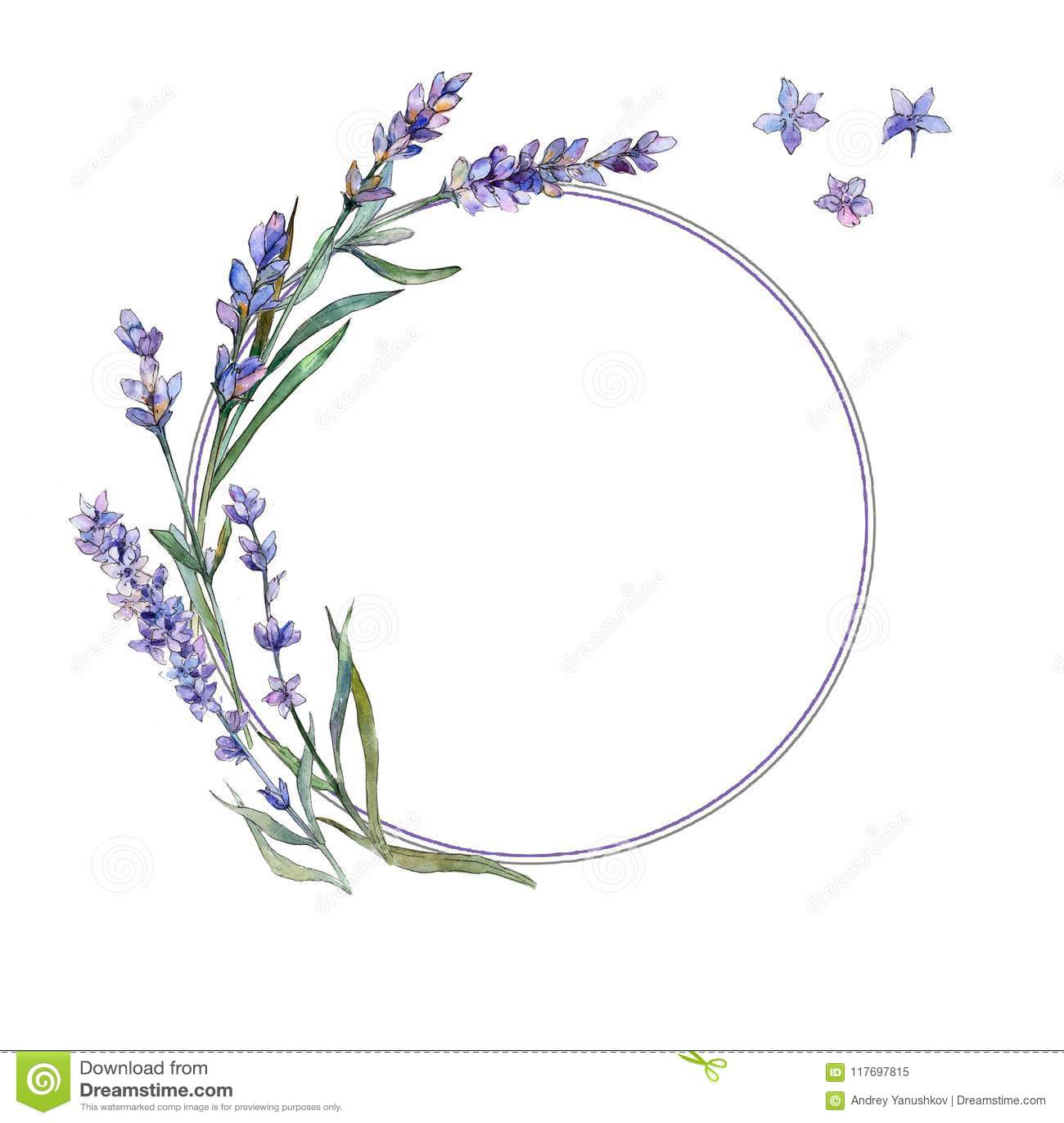 Ιώδες lavender Floral βοτανικό λουλούδι Τετράγωνο διακοσμήσεων συνόρων πλαισίων