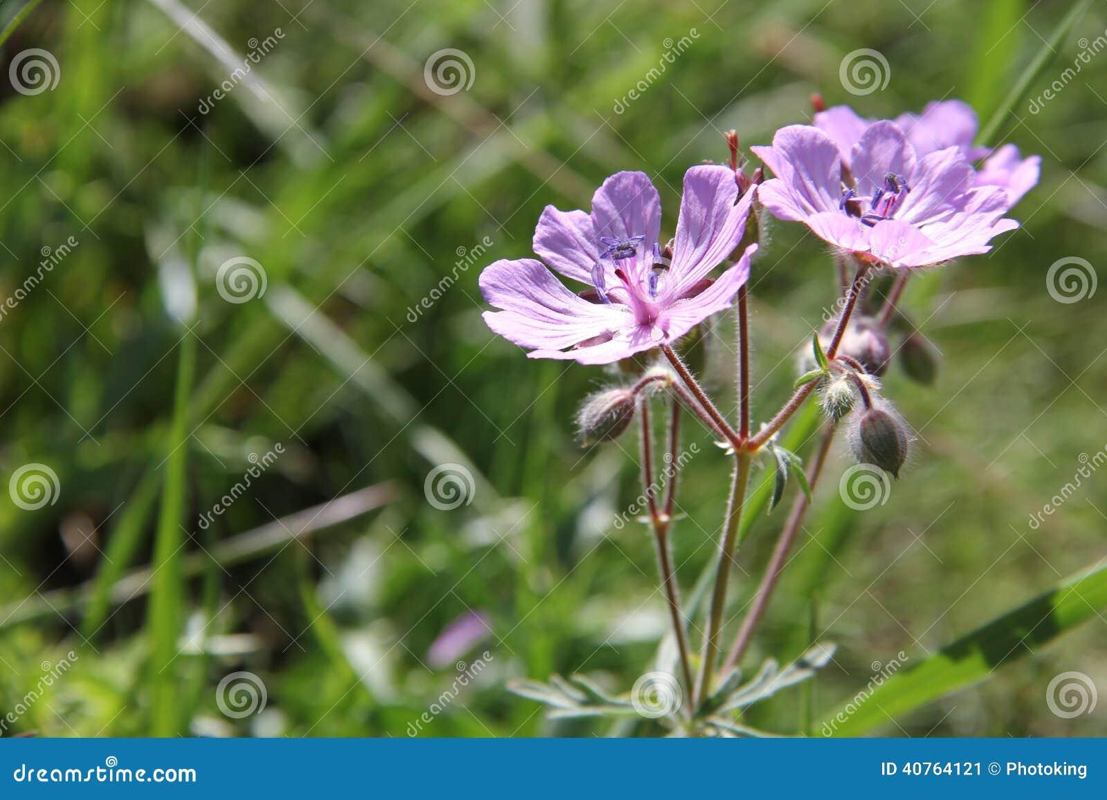 Ιώδης κινηματογράφηση σε πρώτο πλάνο λουλουδιών