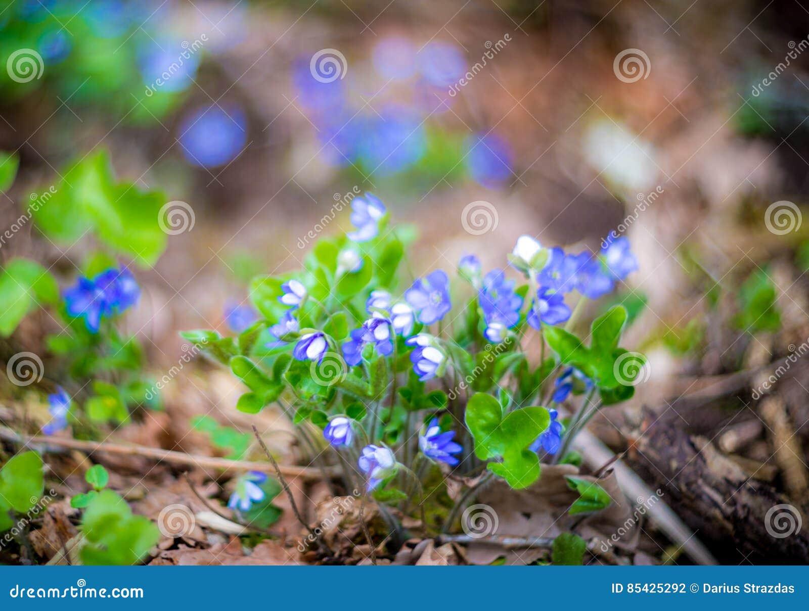 Ιώδη λουλούδια δεσμών