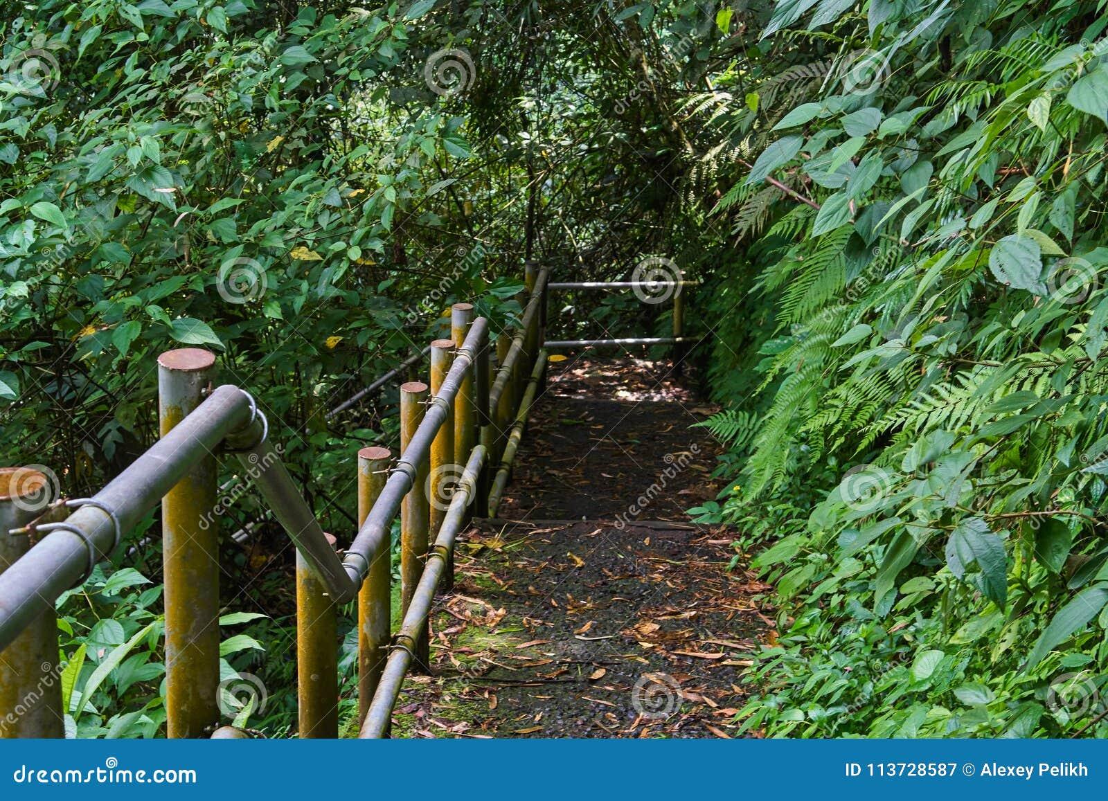 Κάθοδος στη ζούγκλα