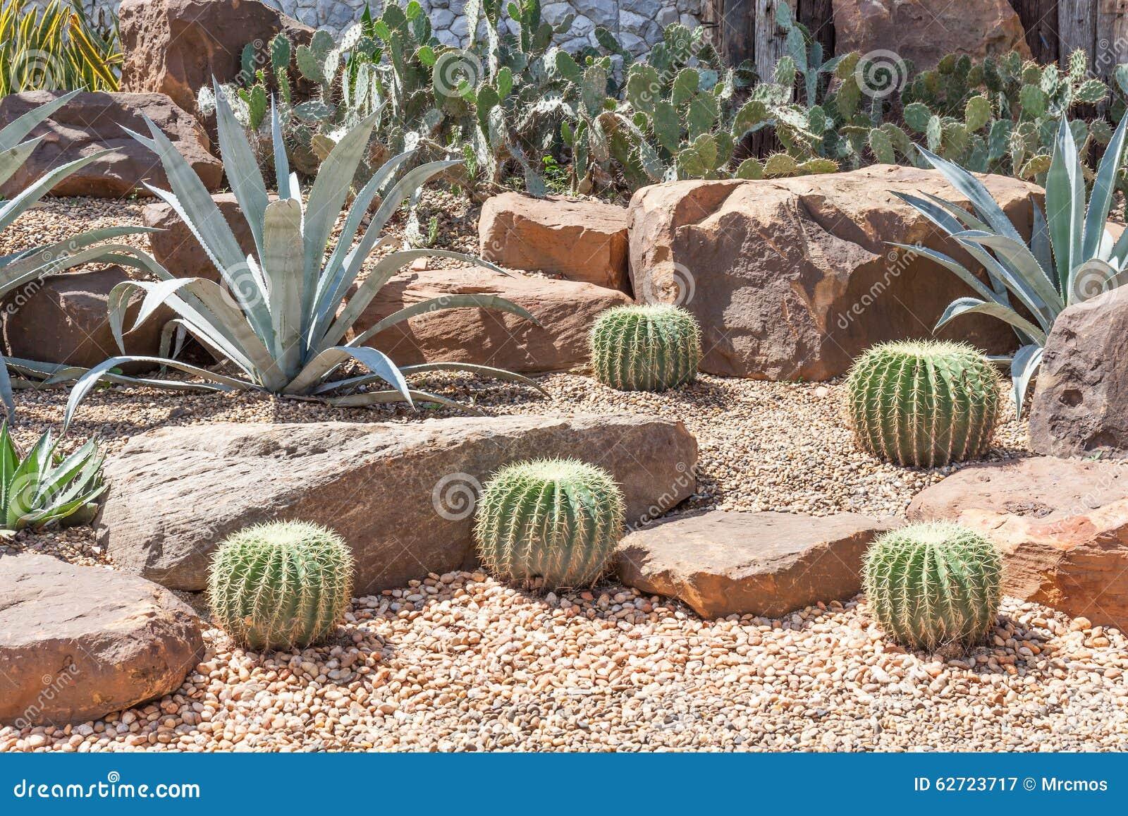 Κάκτος στο βοτανικό κήπο, πρότυπο του κήπου ερήμων