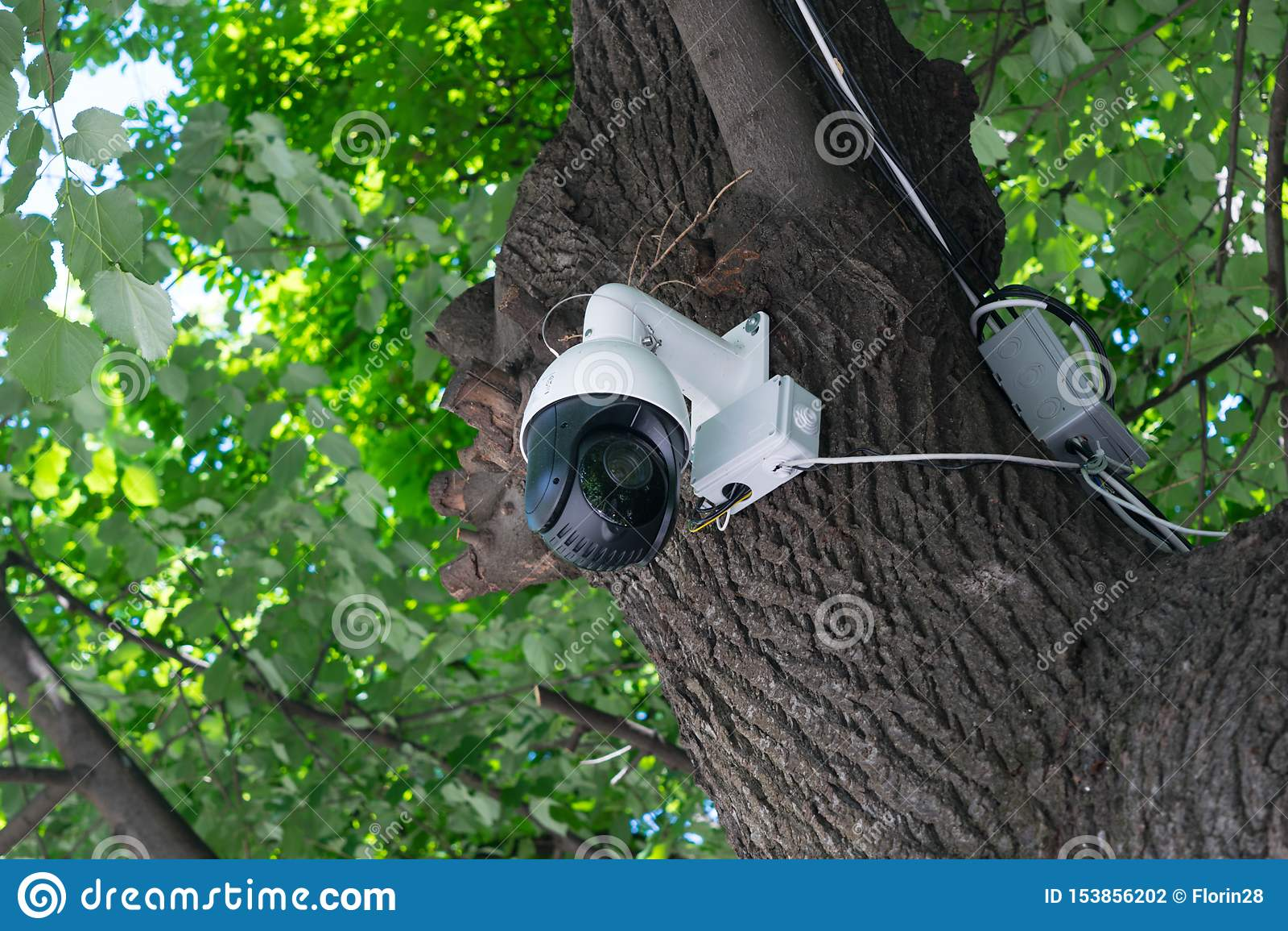 Κάμερα CCTV 360 επιτήρησης που τοποθετείται σε ένα δέντρο στο πάρκο