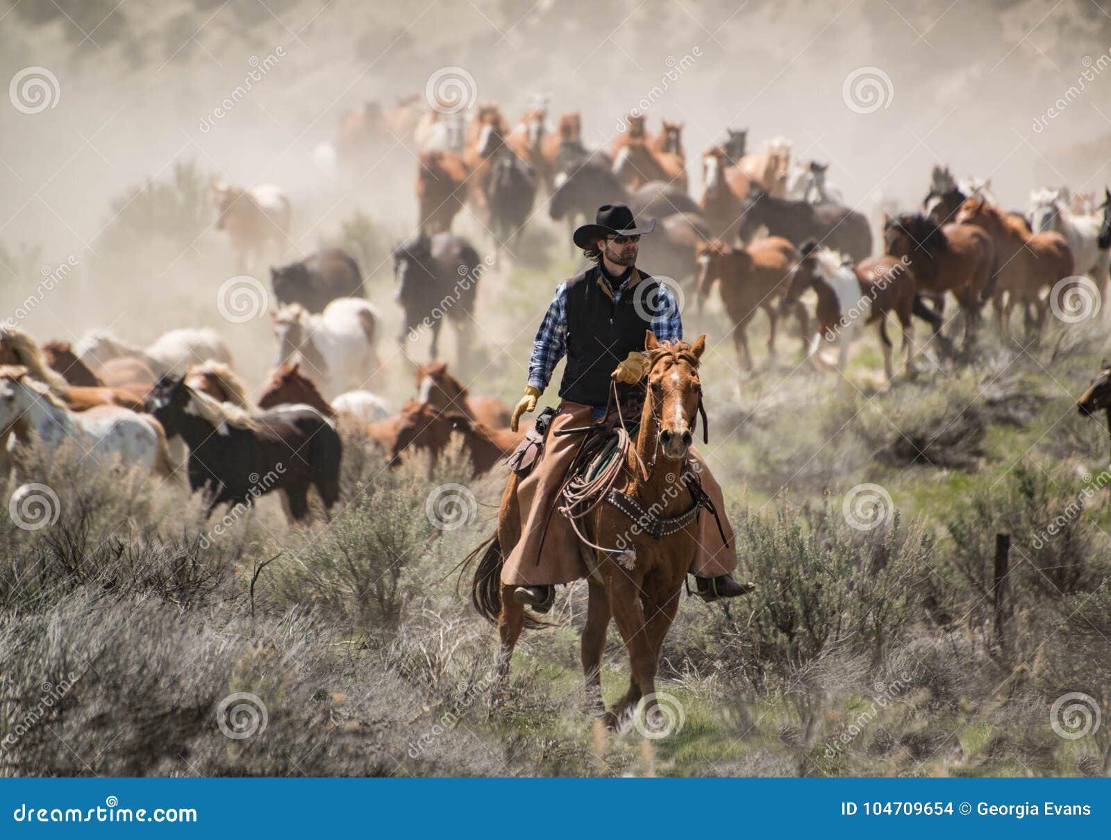 Κάουμποϋ με το οδηγώντας κοπάδι αλόγων αλόγων μαύρων καπέλων και sorrel σε έναν καλπασμό