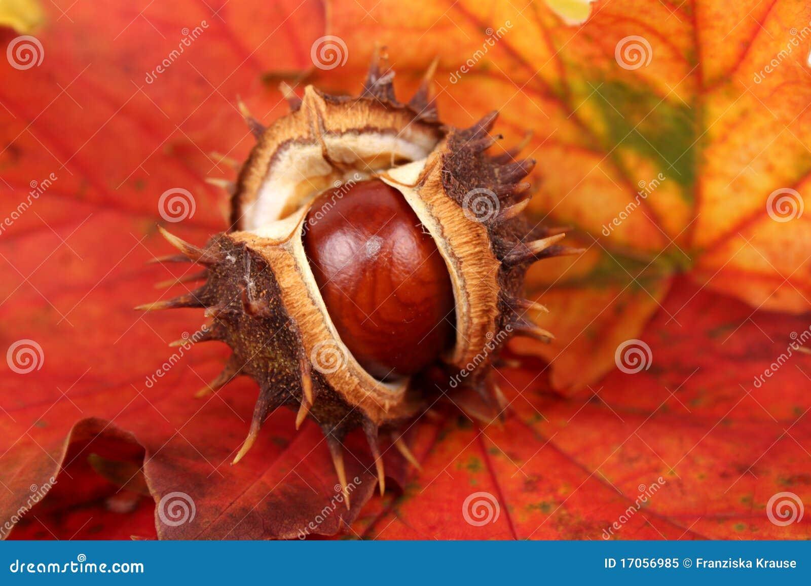 Κάστανο σε ένα φύλλο φθινοπώρου