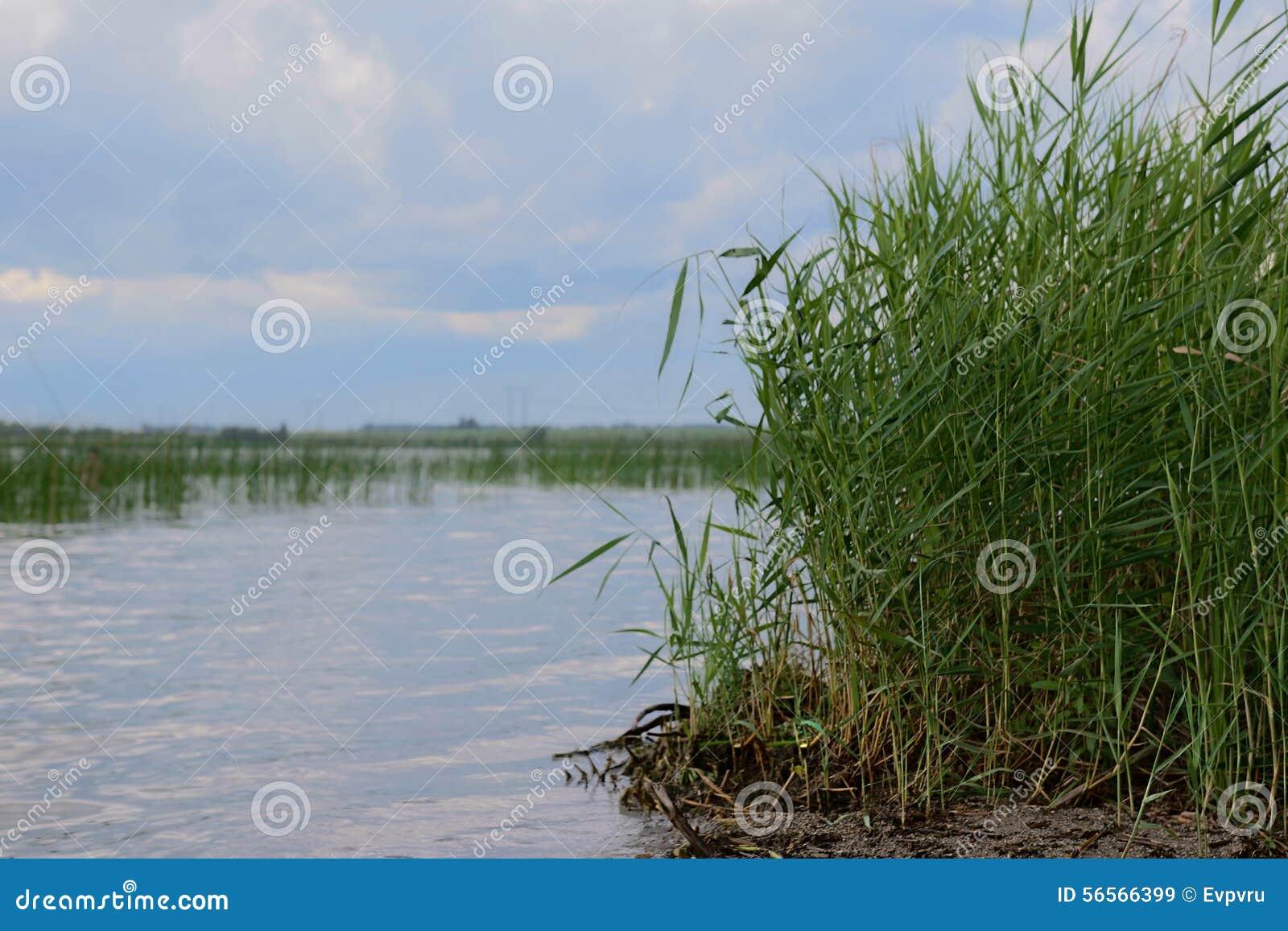 Download κάλαμος στοκ εικόνα. εικόνα από ύδωρ, τοπία, σύννεφο - 56566399