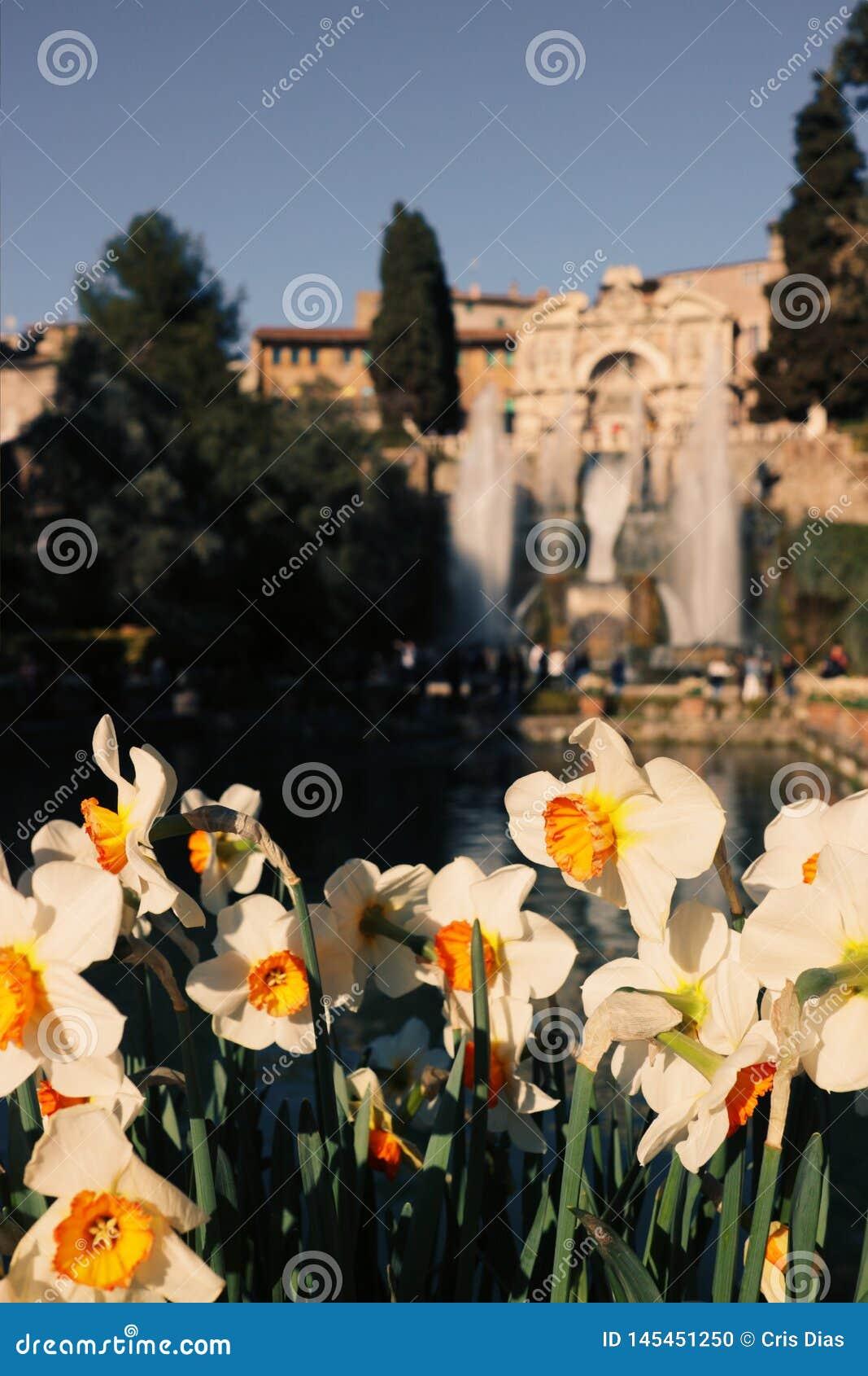 """Κήποι της βίλας Δ """"Este"""