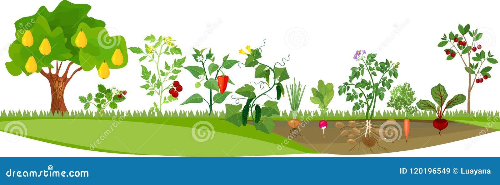 Κήπος κουζινών ή φυτικός κήπος με τα διαφορετικά λαχανικά και τα οπωρωφόρα δέντρα