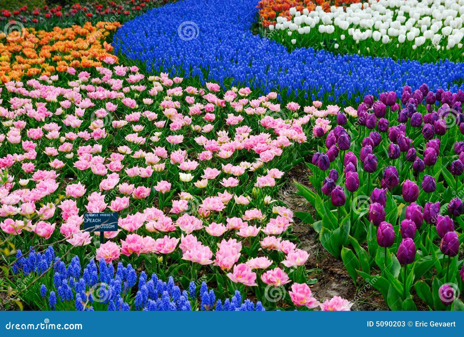 κήπος λουλουδιών