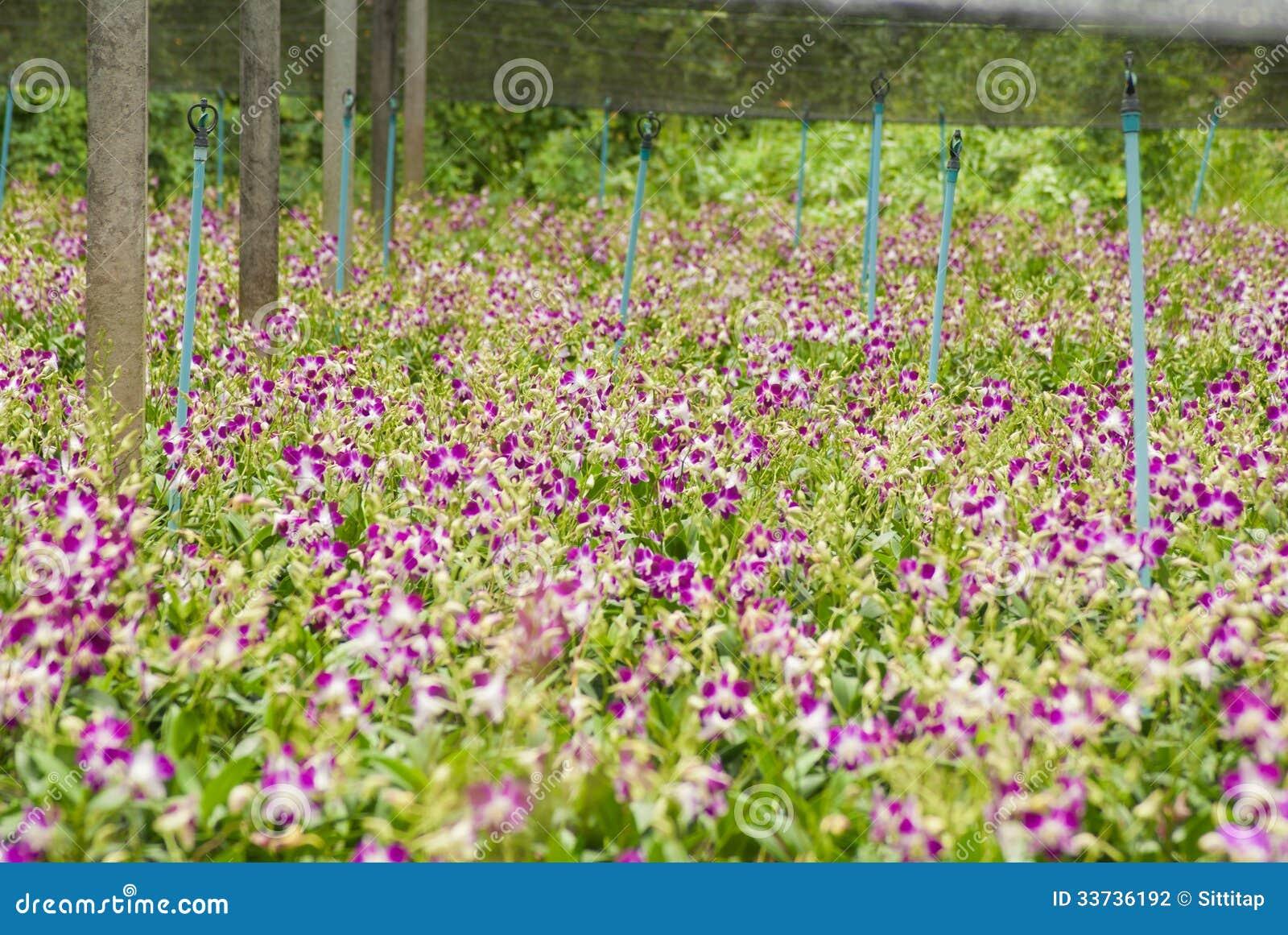 Κήπος ορχιδεών