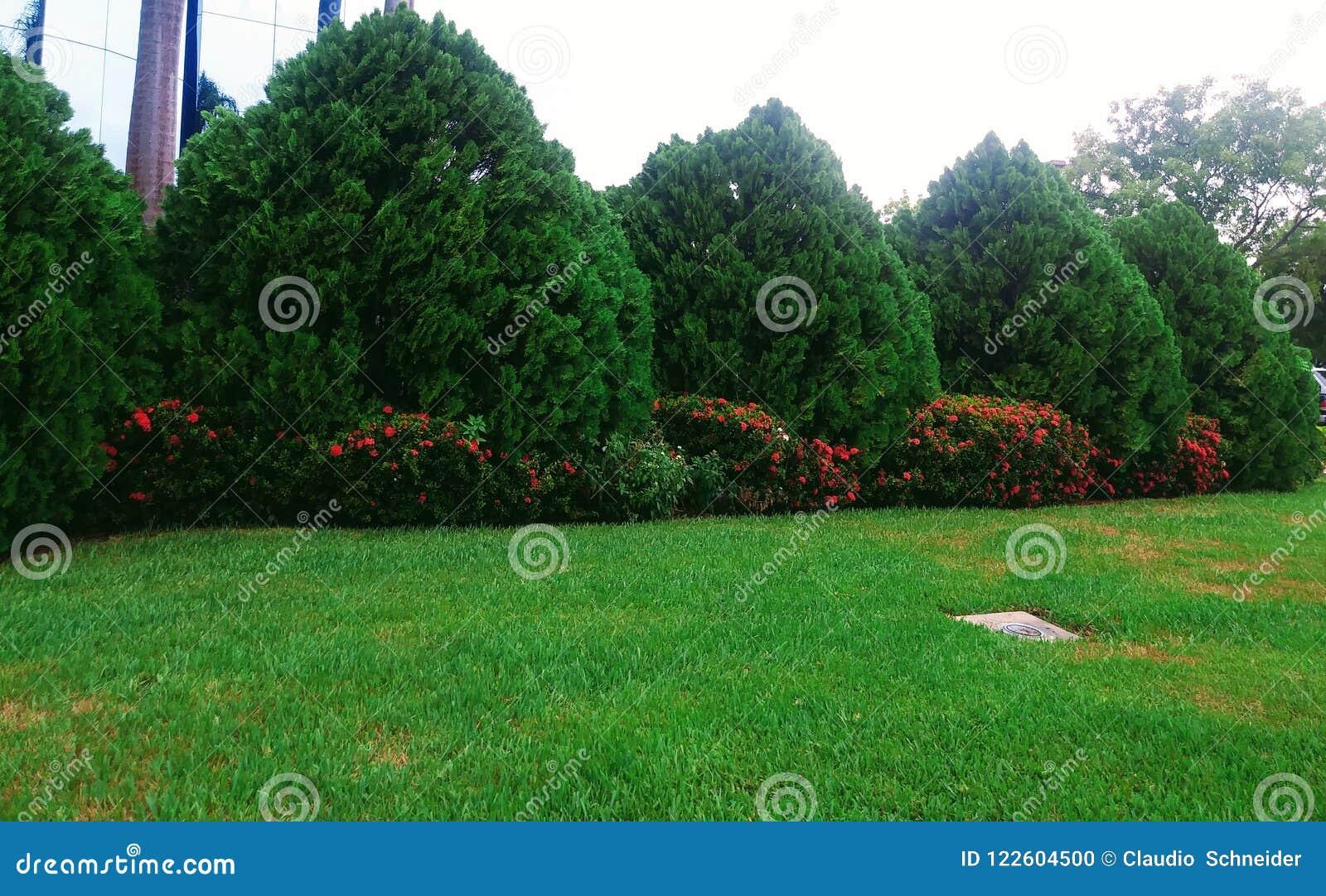 Κήπος στο Μαϊάμι, Φλώριδα Ηνωμένες Πολιτείες