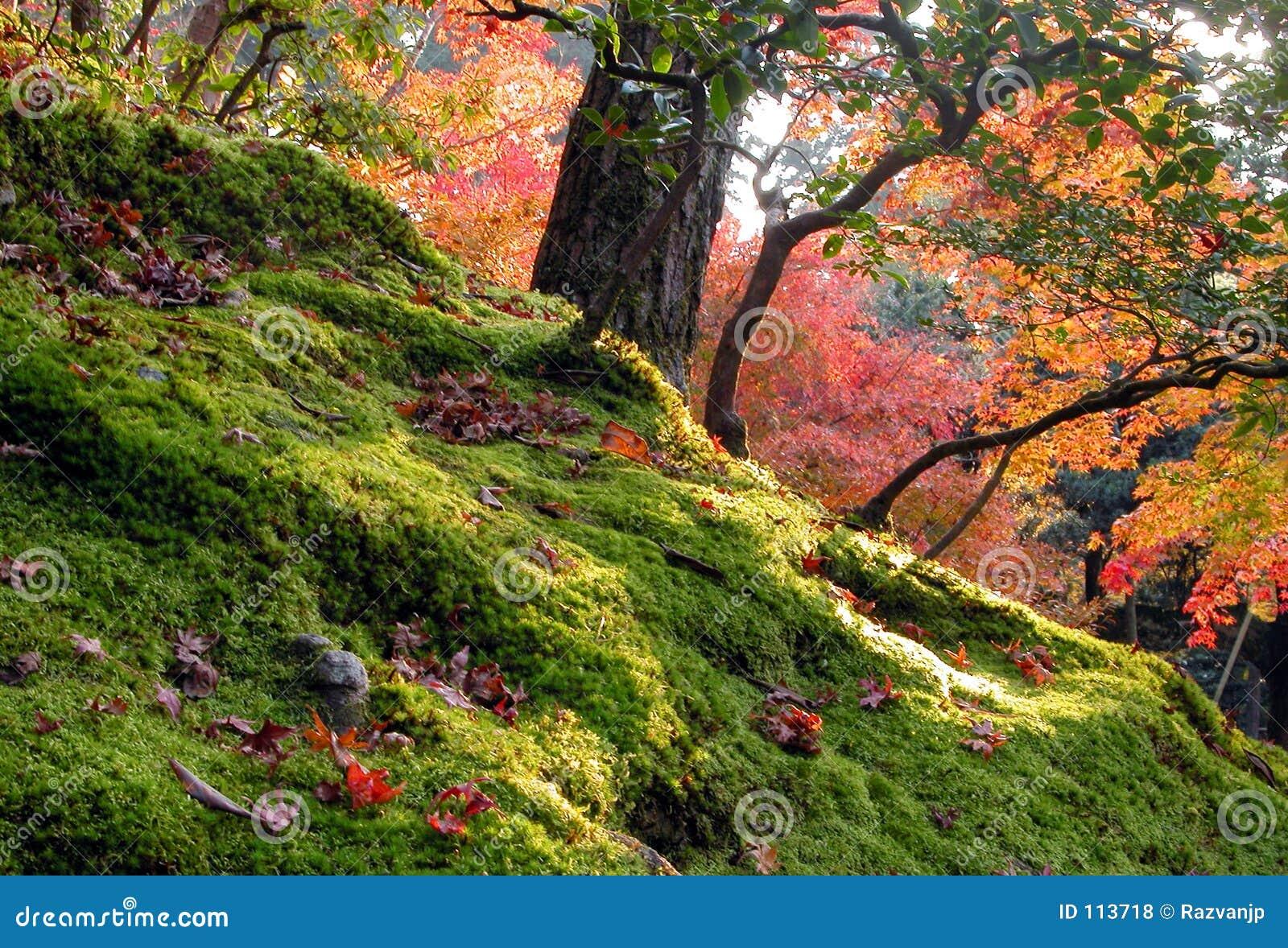 κήπος φθινοπώρου