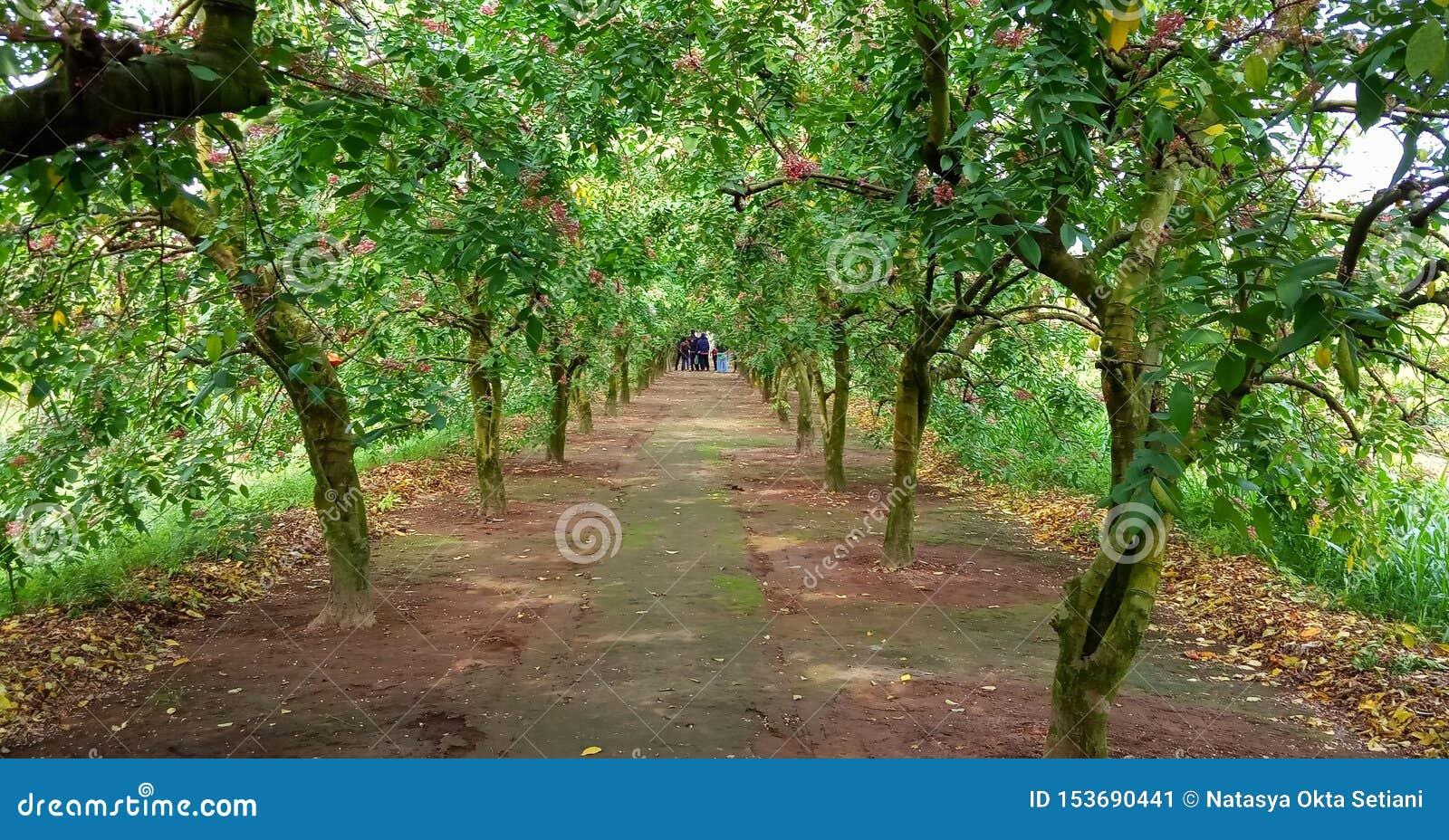 Κήπος φρούτων αστεριών