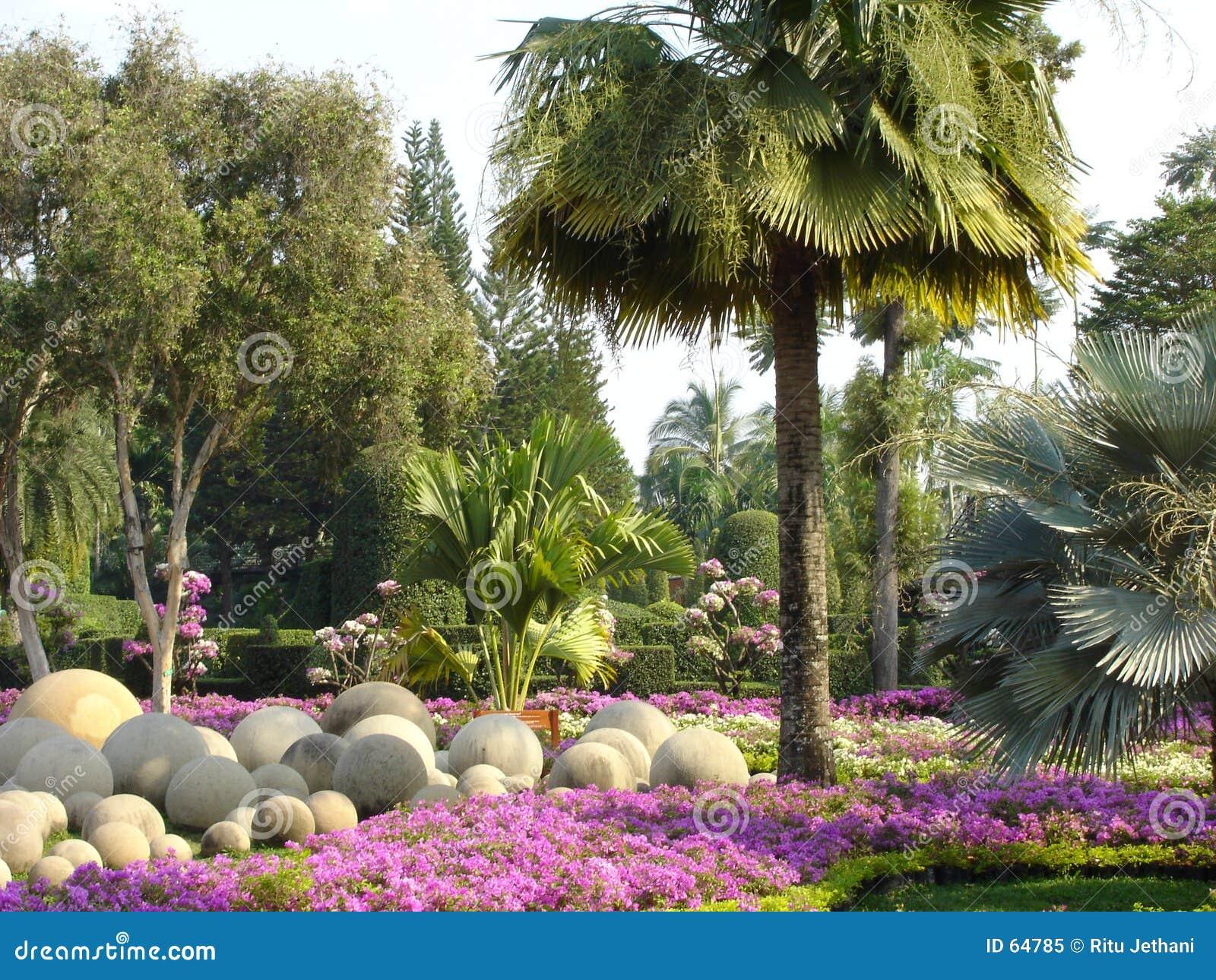 Download κήπος nong nooch τροπικός στοκ εικόνα. εικόνα από λουλούδια - 64785