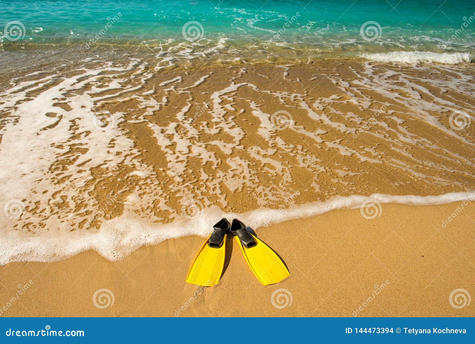Κίτρινα βατραχοπέδιλα στην παραλία άμμου