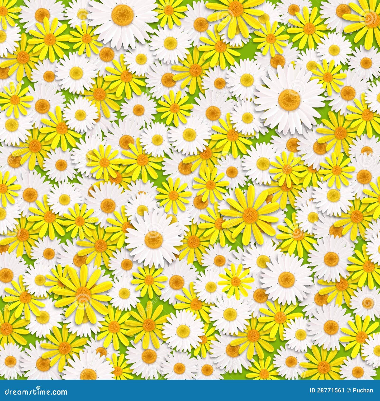 Κίτρινα και άσπρα λουλούδια μαργαριτών