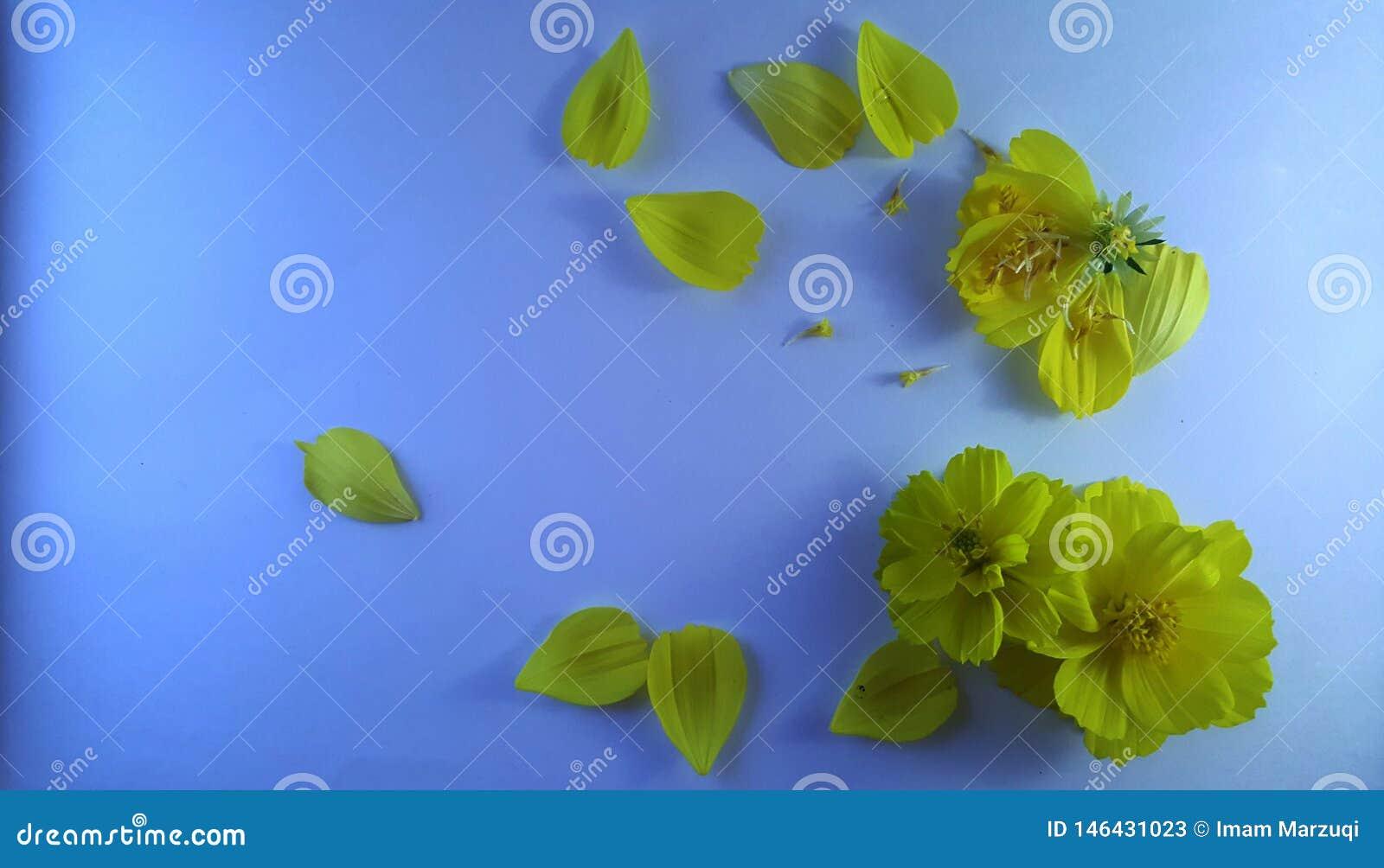 Κίτρινα λουλούδια στο μπλε κατασκευασμένο υπόβαθρο 2
