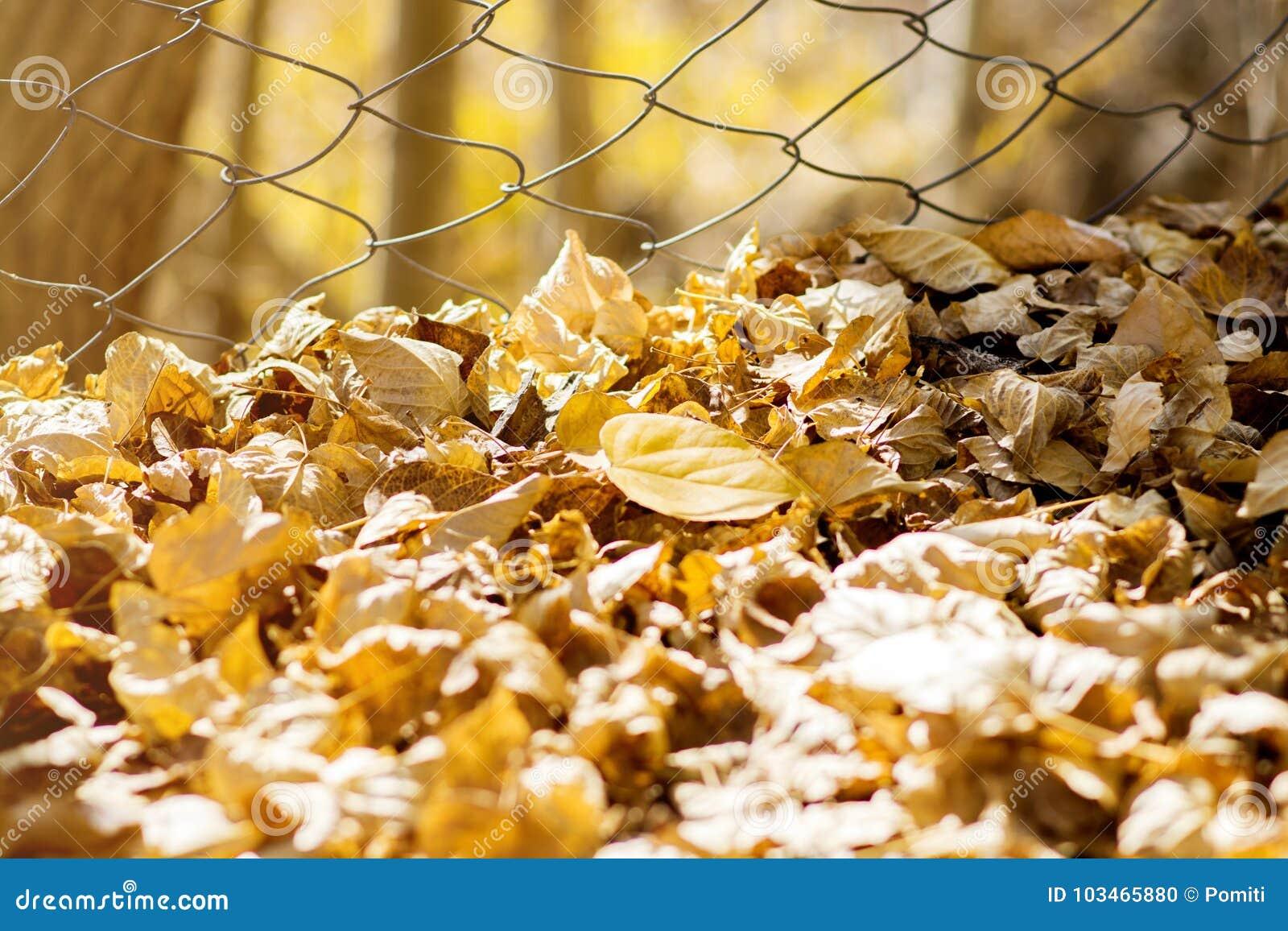 Κίτρινα ξηρά φύλλα στο έδαφος