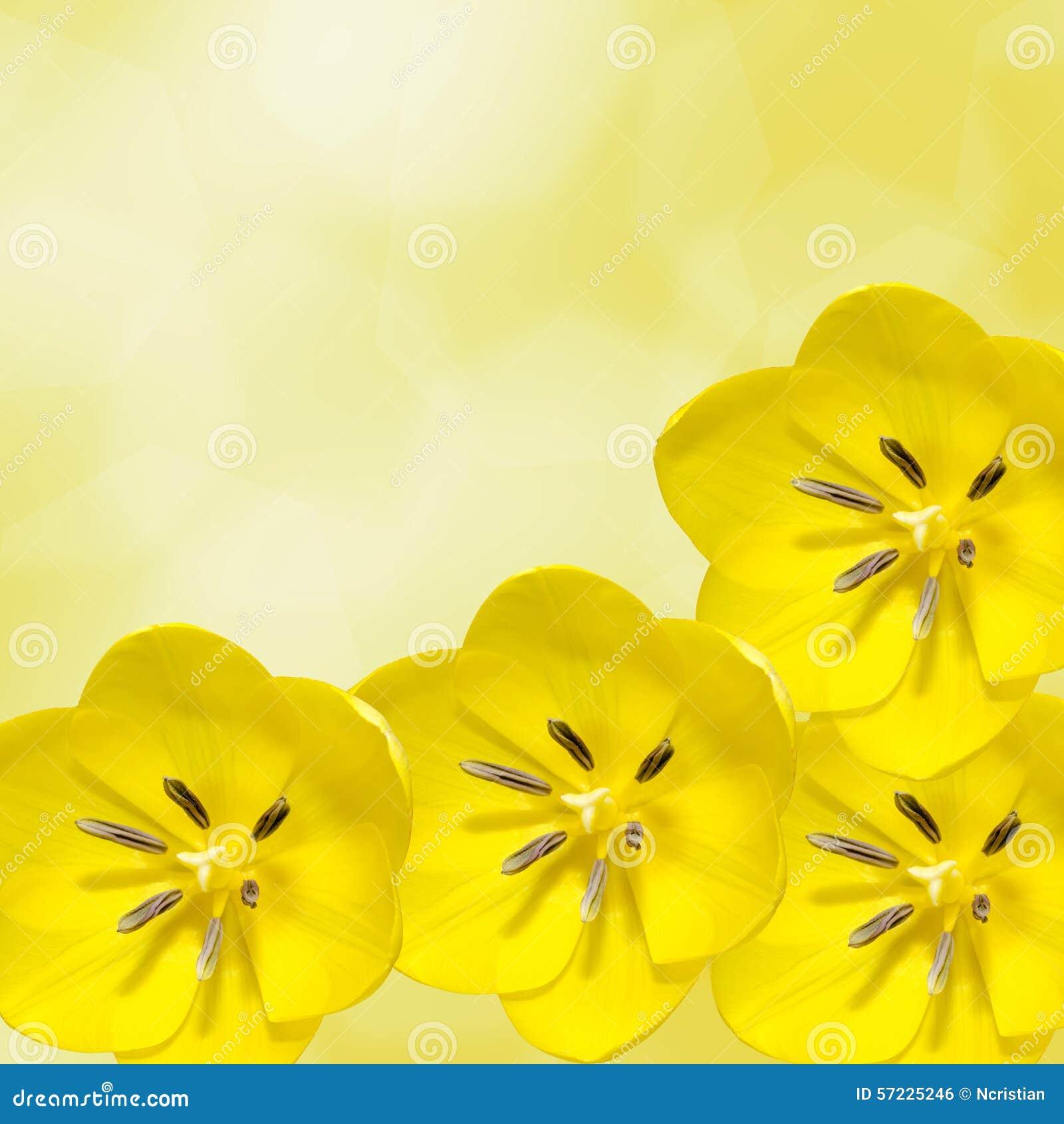 Κίτρινα λουλούδια τουλιπών, floral ρύθμιση,