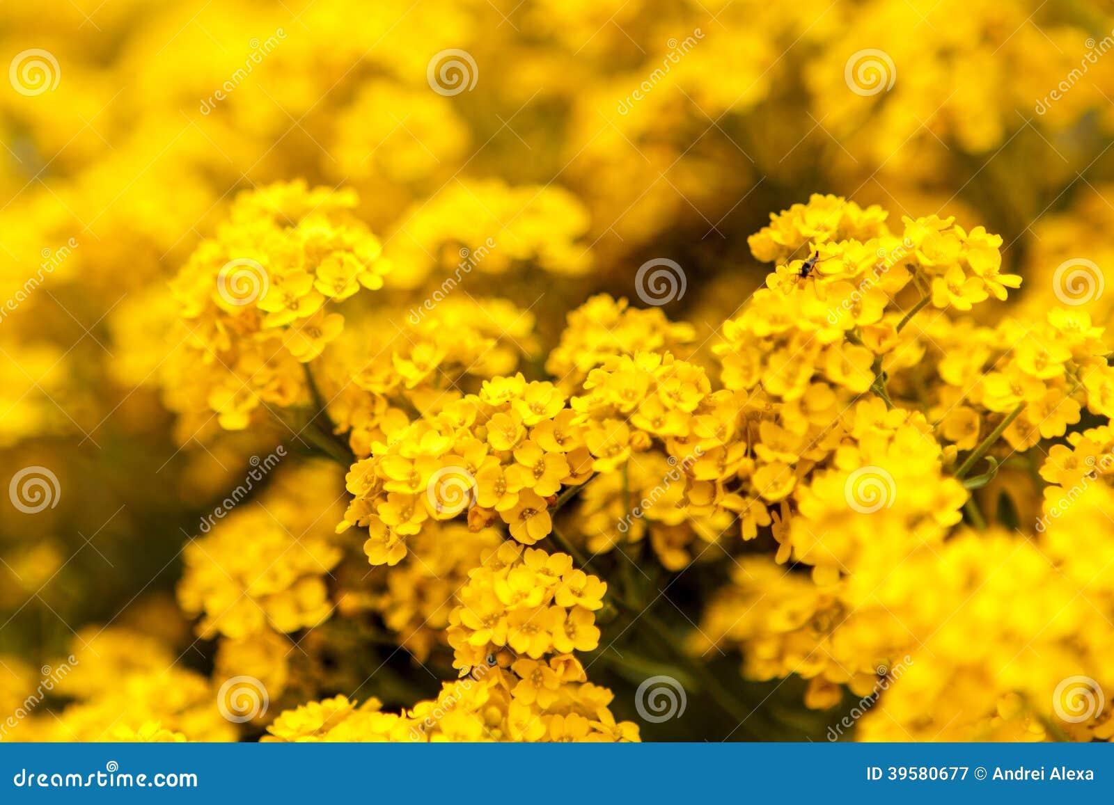 Κίτρινα λουλούδια