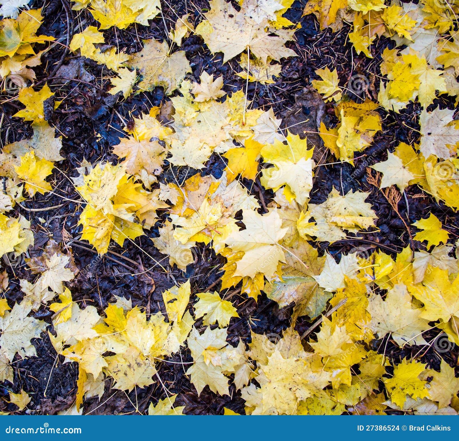 Κίτρινα φύλλα φθινοπώρου