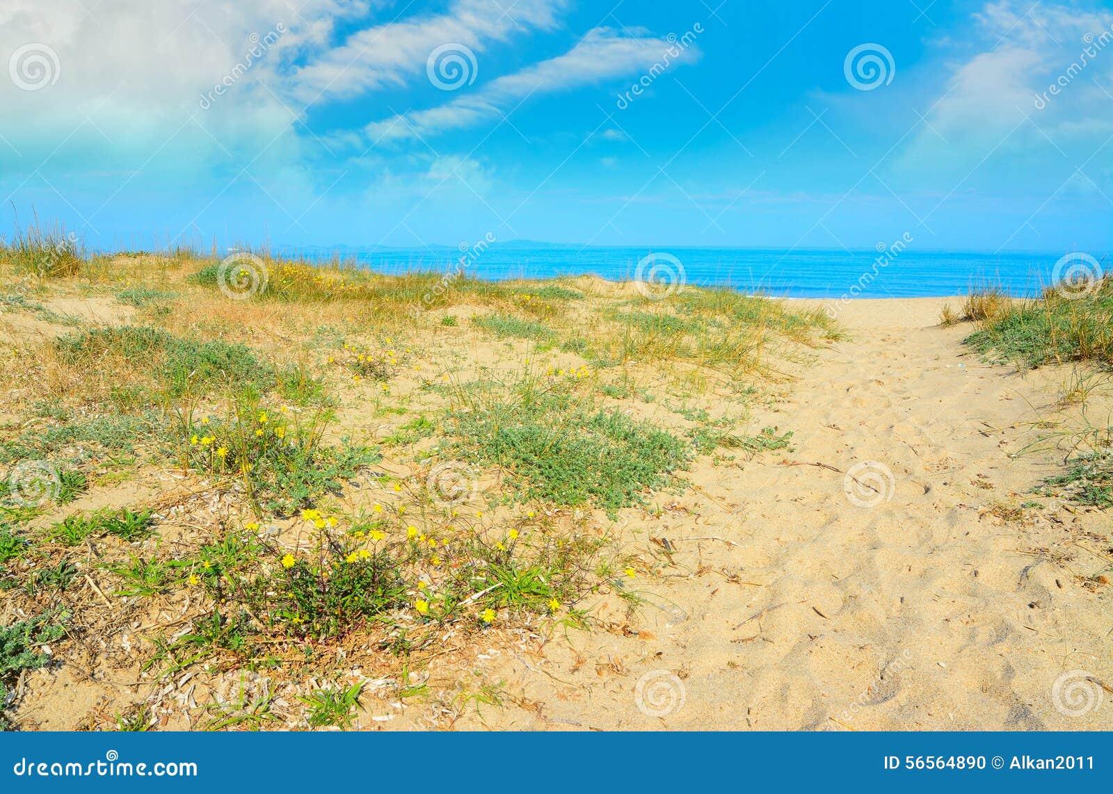 Download Κίτρινη άμμος στην ακτή Platamona Στοκ Εικόνες - εικόνα από κανένας, αμμόλοφος: 56564890