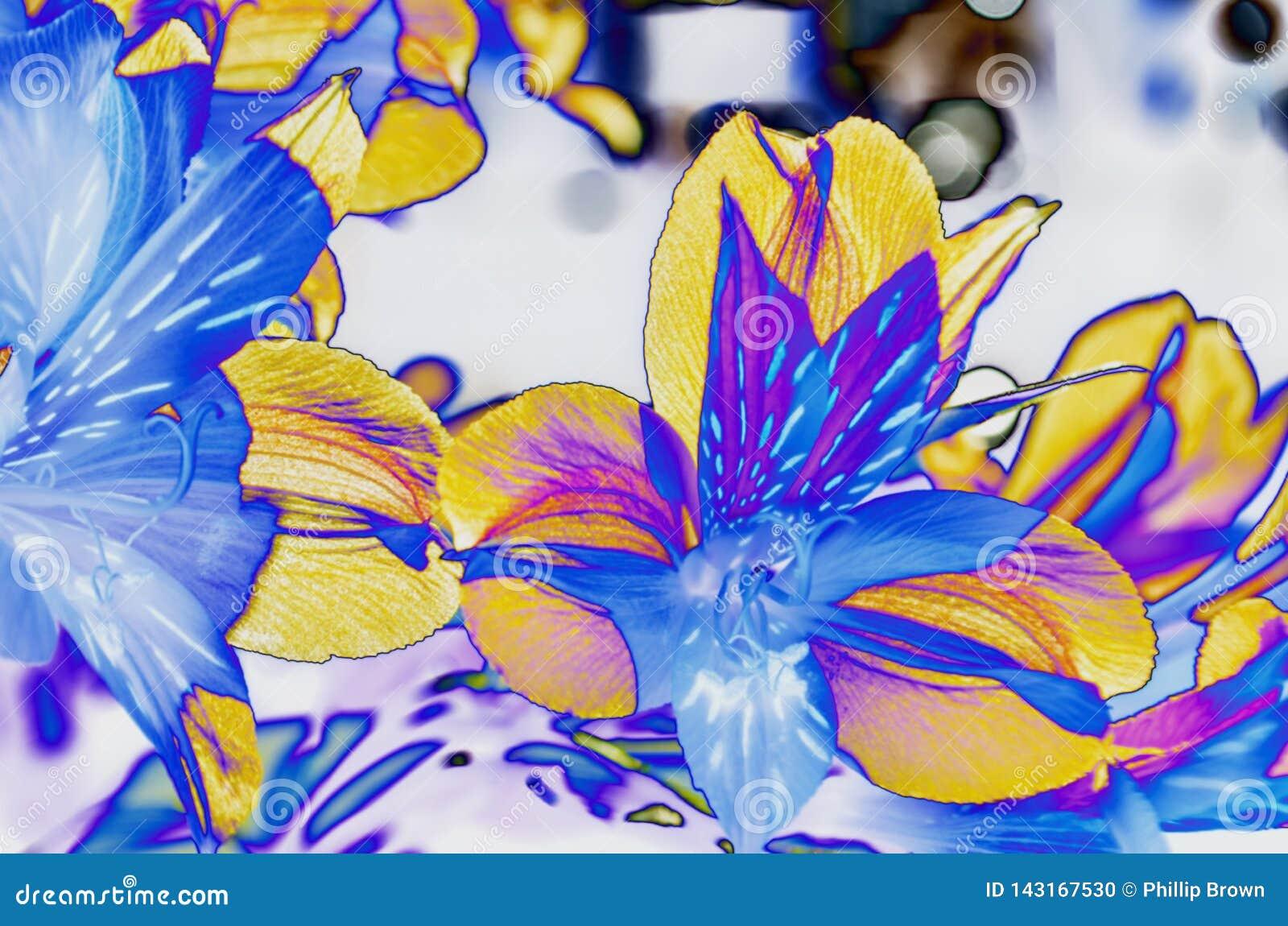 Κίτρινη μπλε και πορφυρή τέχνη πετάλων λουλουδιών κρίνων ημέρας
