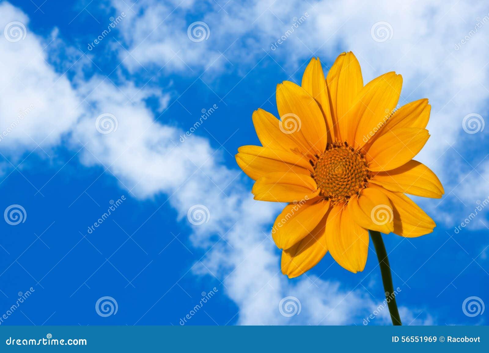 Download Κίτρινη ντάλια στοκ εικόνα. εικόνα από ημέρα, αιώνιος - 56551969
