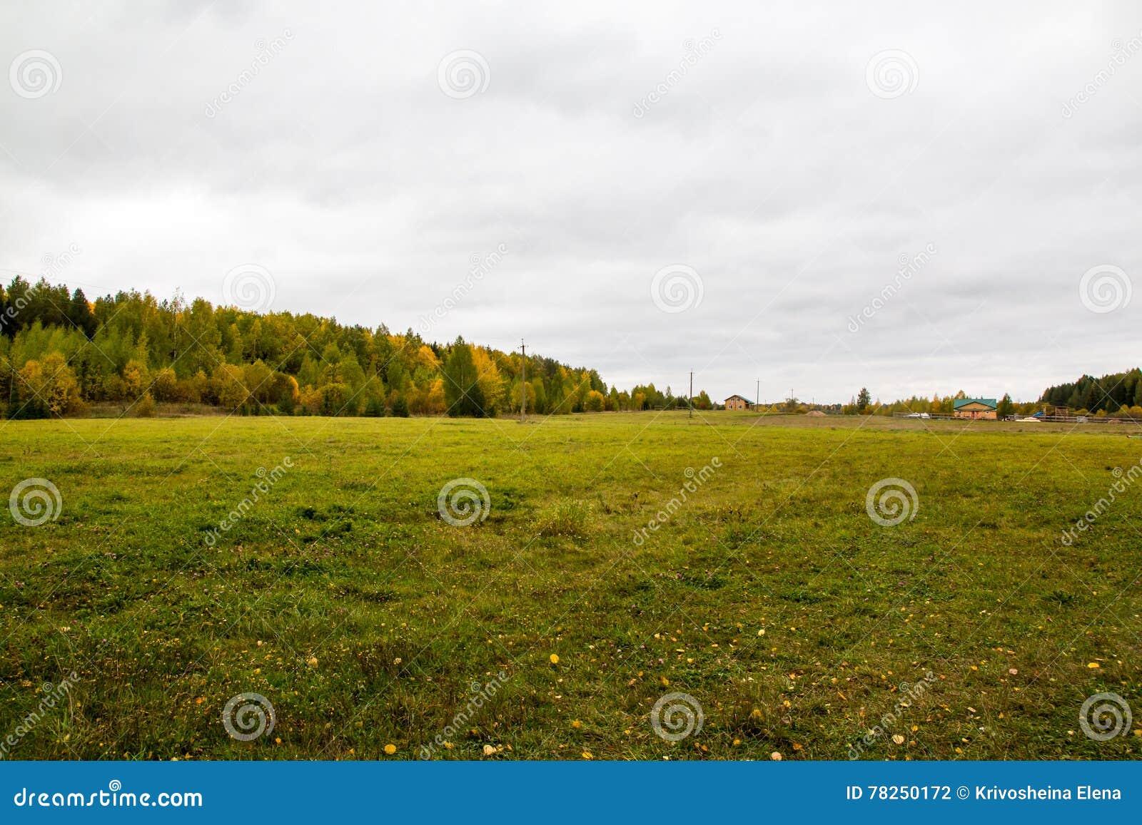 Κίτρινοι τομέας και δάσος