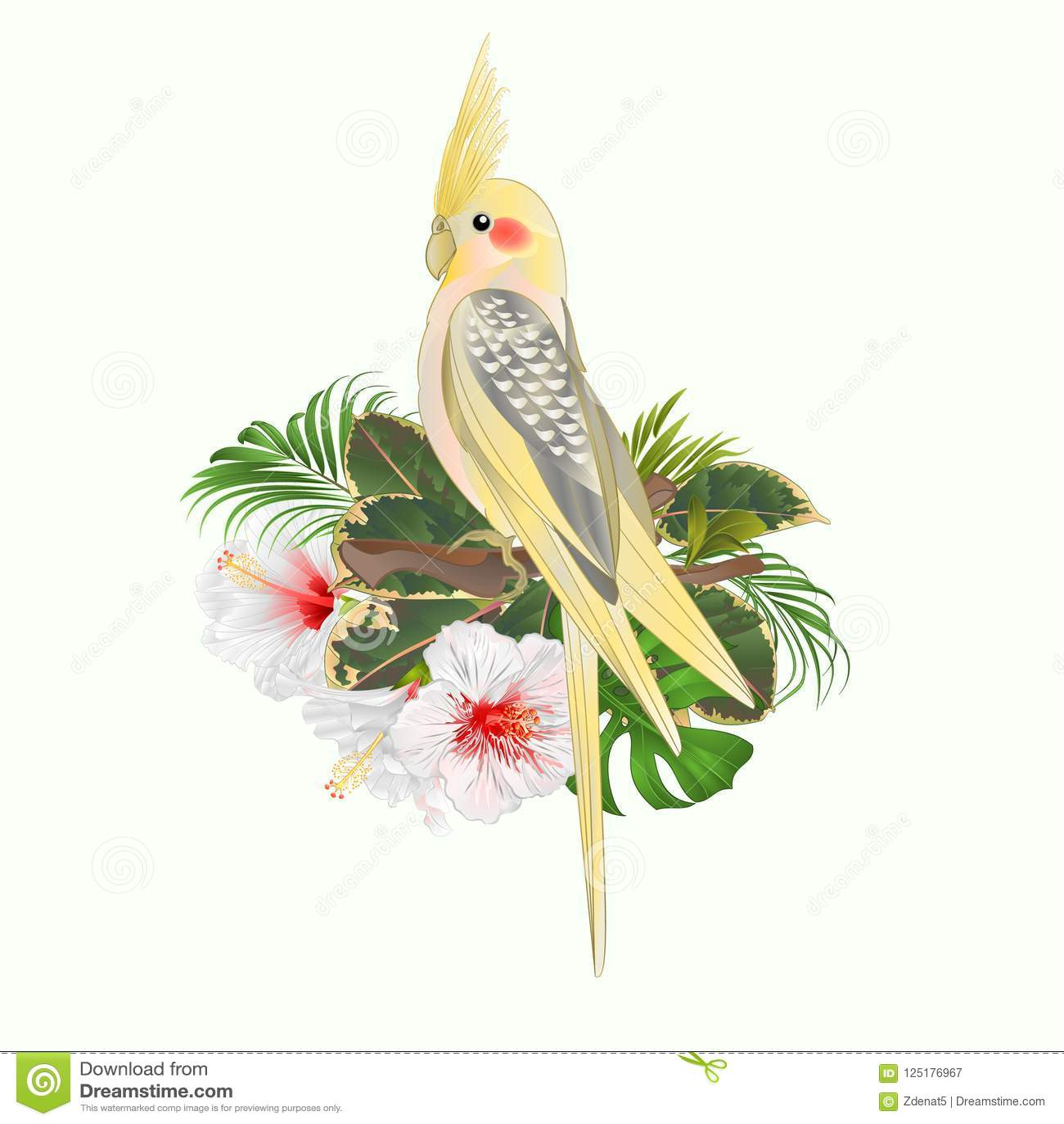 Κίτρινος αστείος παπαγάλος πουλιών cockatiel χαριτωμένος τροπικός και άσπρο hibiscus ύφος watercolor σε ένα άσπρο εκλεκτής ποιότη