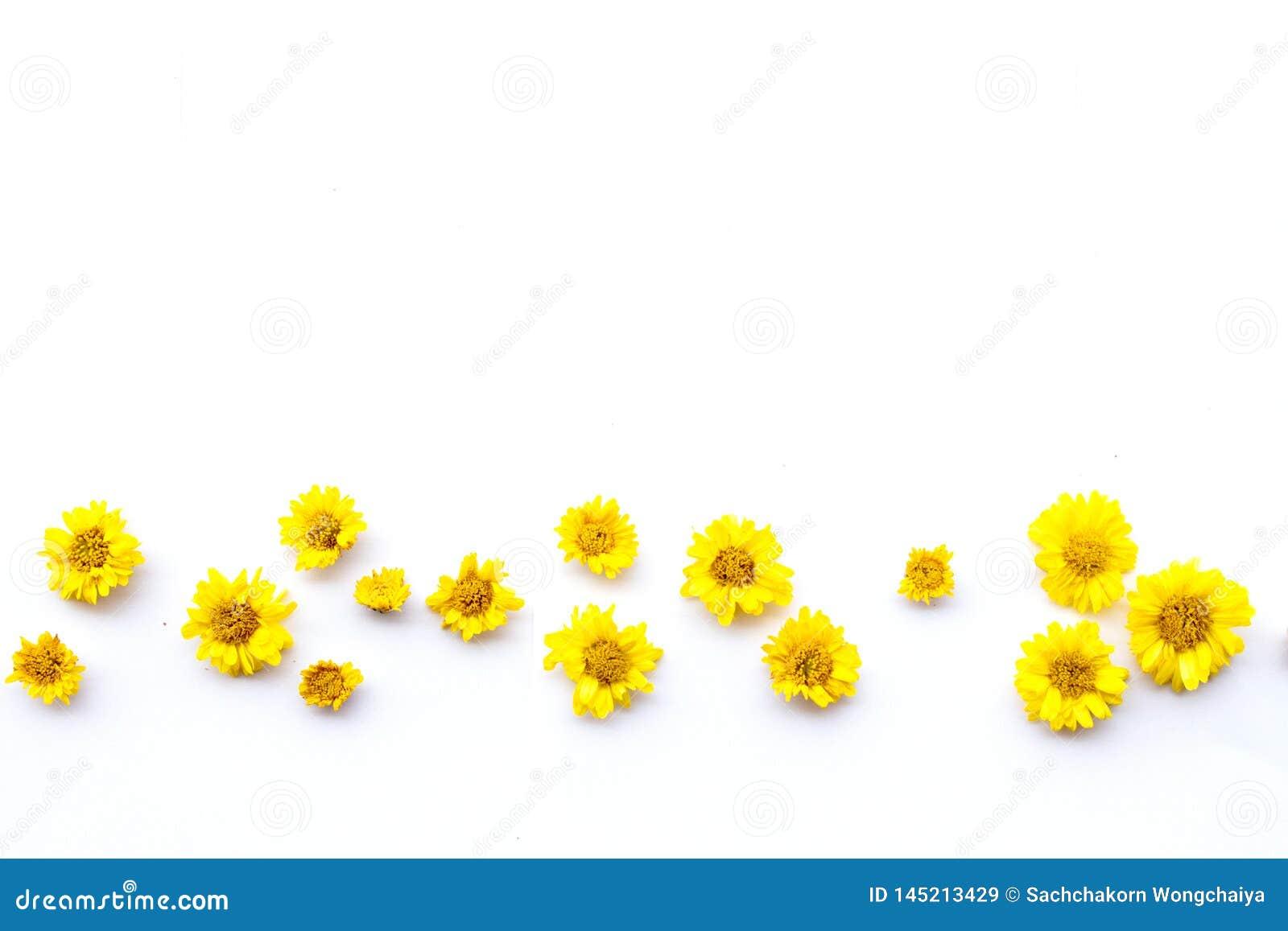 Κίτρινο λουλούδι χρυσάνθεμων