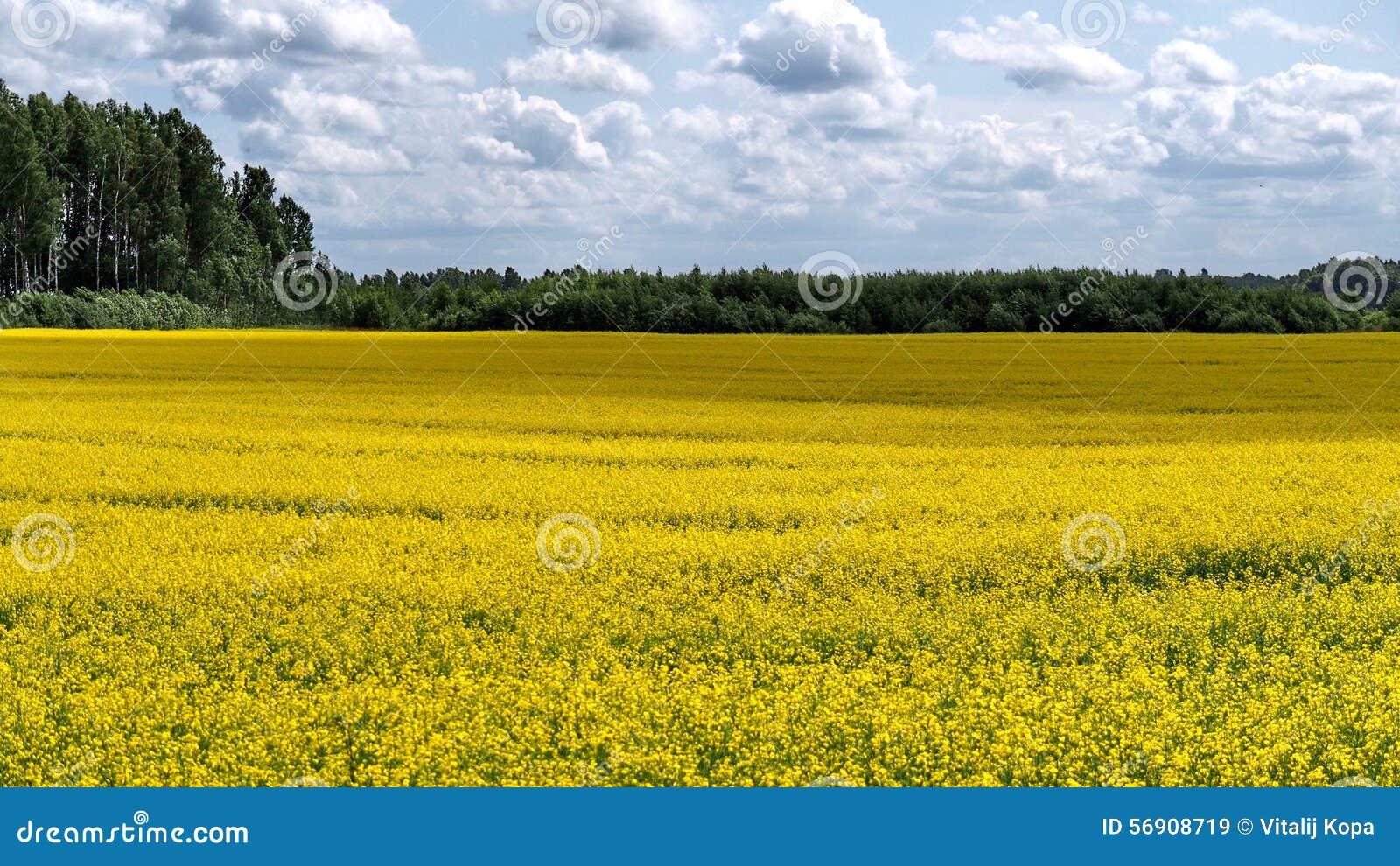 Κίτρινος τομέας και cludy ουρανός