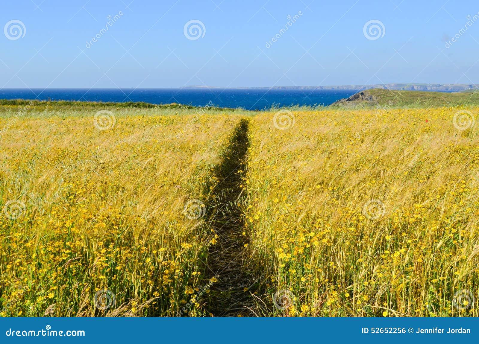 Κίτρινο άγριο λιβάδι λουλουδιών που κόβεται στο μισό από την πορεία
