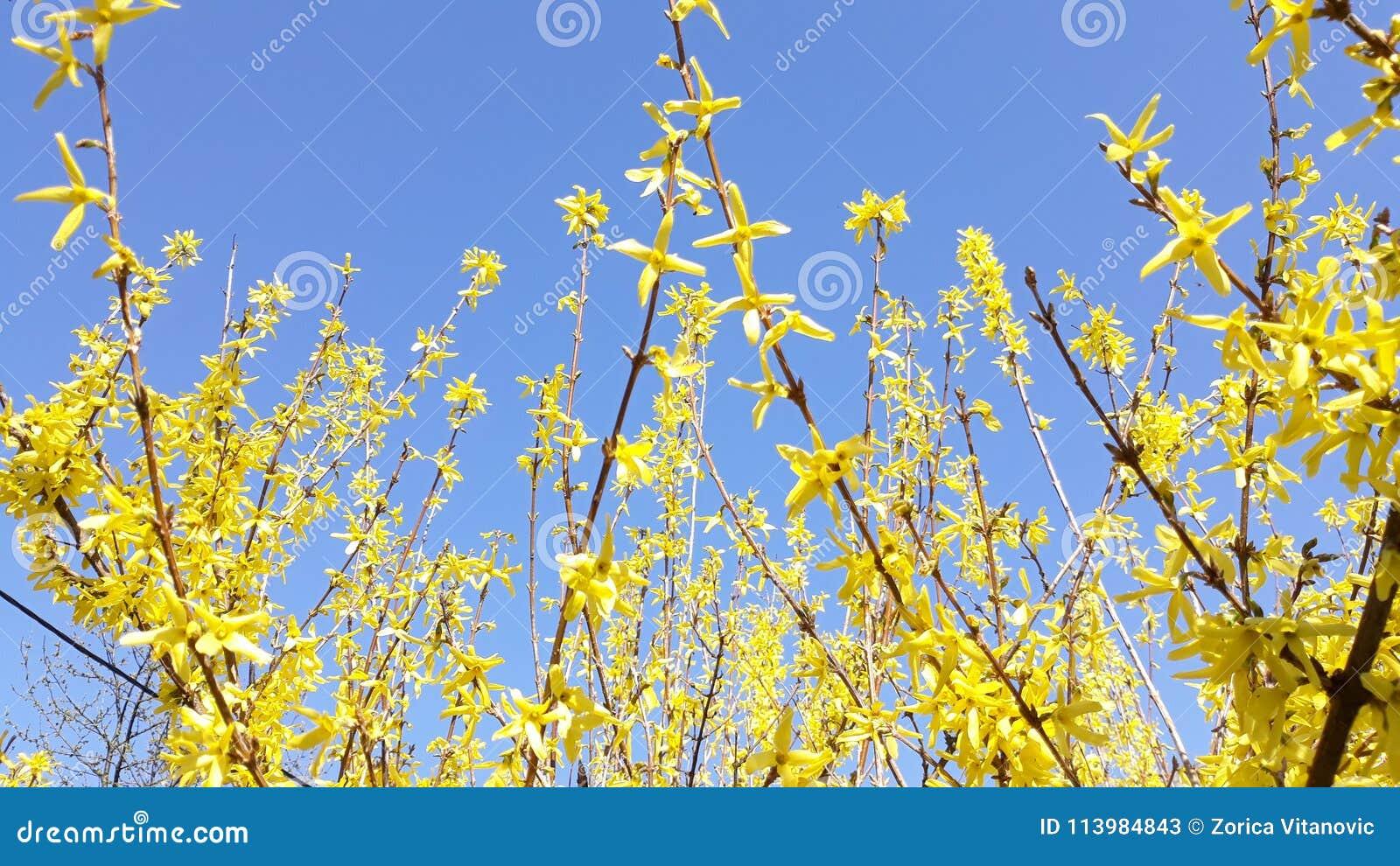 Κίτρινο λουλούδι στο μπλε ουρανό