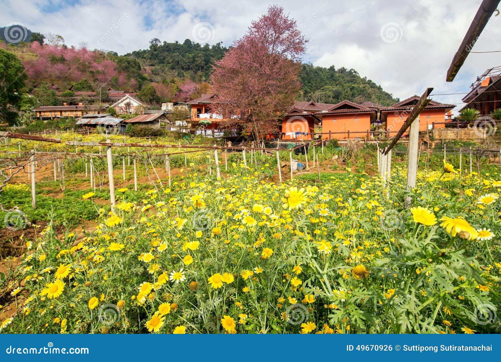 Κίτρινο λουλούδι και ρόδινο άνθος κερασιών με ένα πορτοκαλί σπίτι