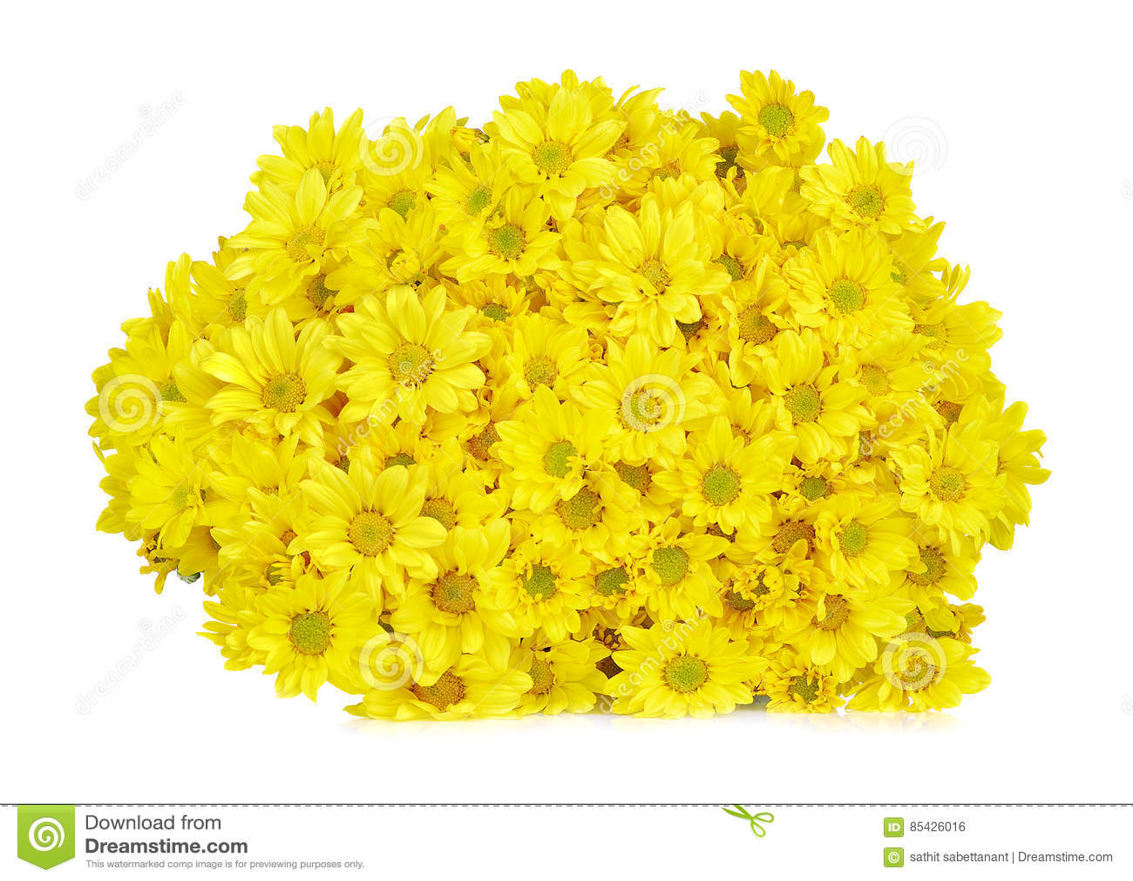 Κίτρινο λουλούδι μαργαριτών gerbera που απομονώνεται σε ένα άσπρο υπόβαθρο