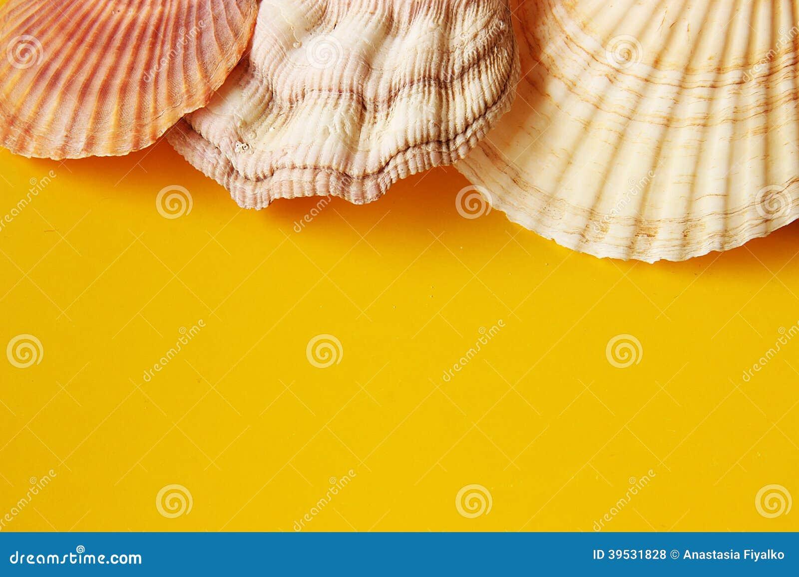 Κίτρινο υπόβαθρο με τα κοχύλια θάλασσας