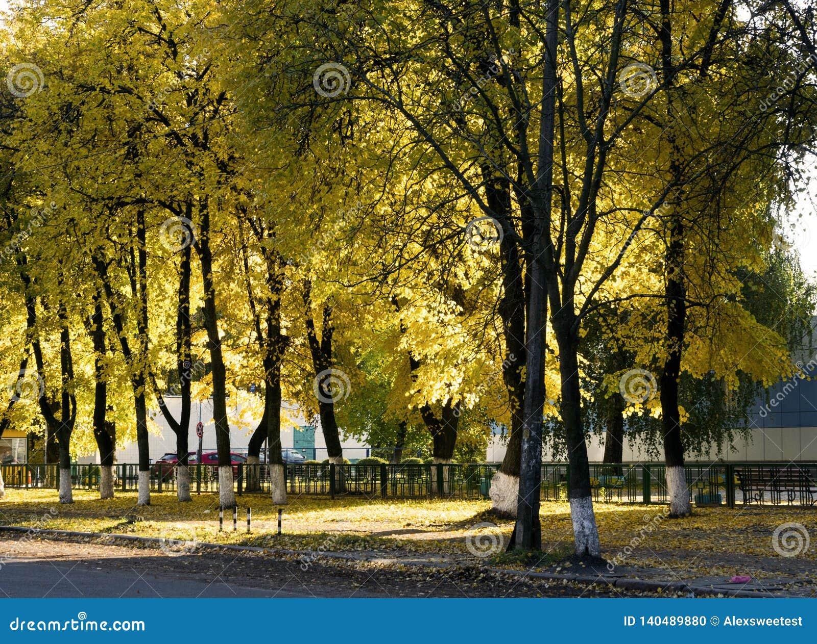 Κίτρινο φθινόπωρο στη μητρόπολη