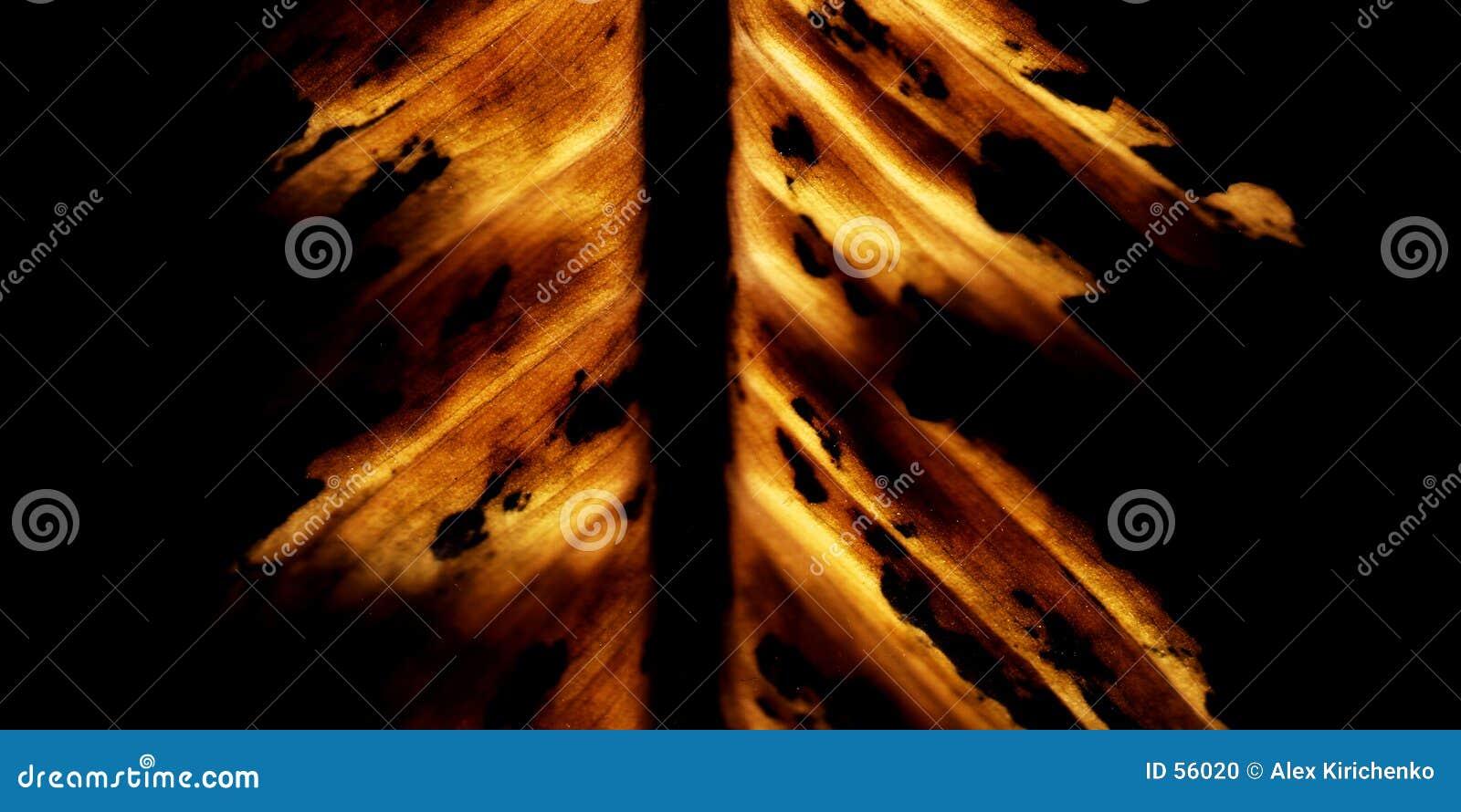 Download καίγοντας φύλλο στοκ εικόνες. εικόνα από ανασκόπησης, αποχής - 56020