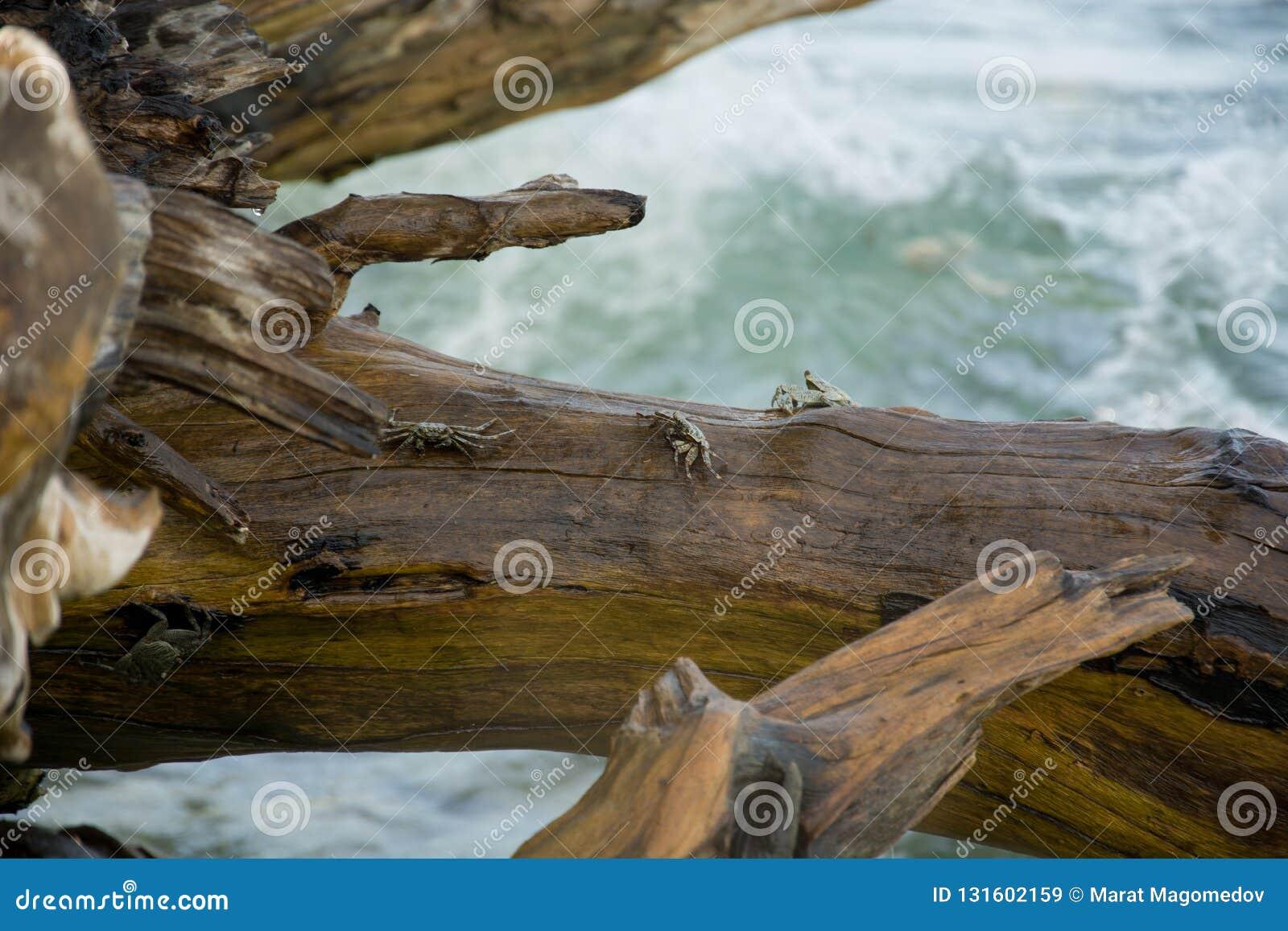 Καβούρια στους βράχους