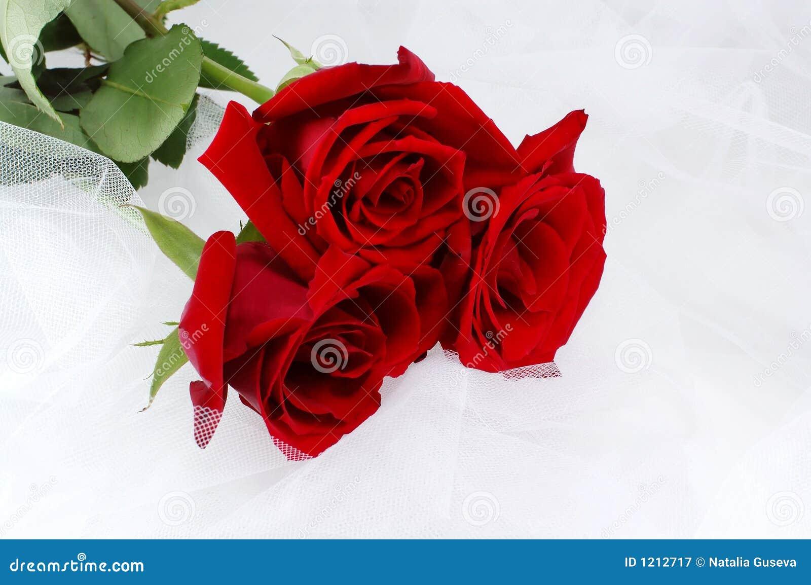 καθαρά κόκκινα τριαντάφυλ