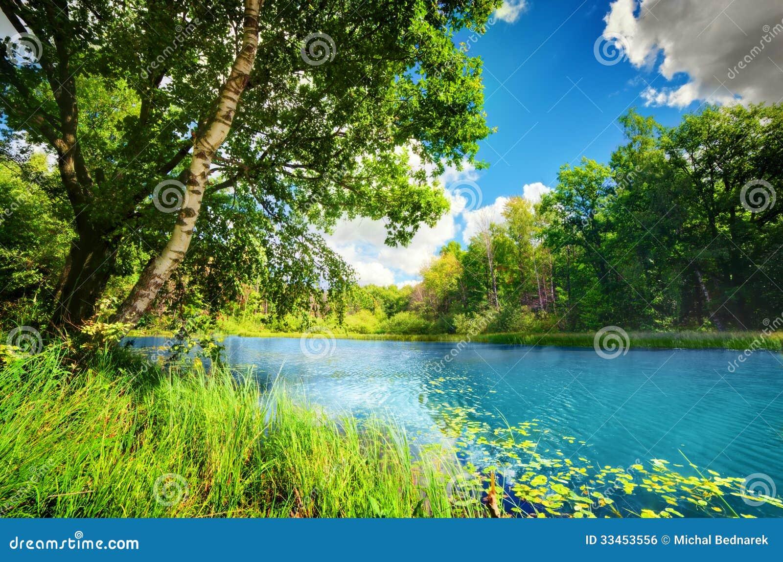 Καθαρή λίμνη στο πράσινο θερινό δάσος άνοιξης