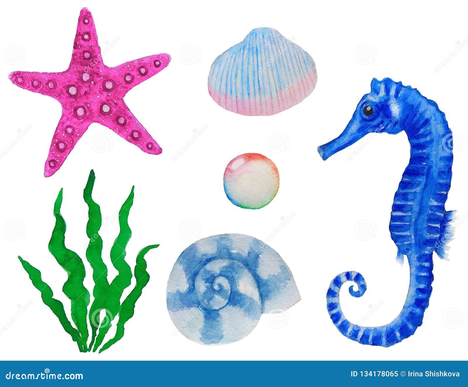 Καθορισμένο watercolor ζώων και φυτών θάλασσας