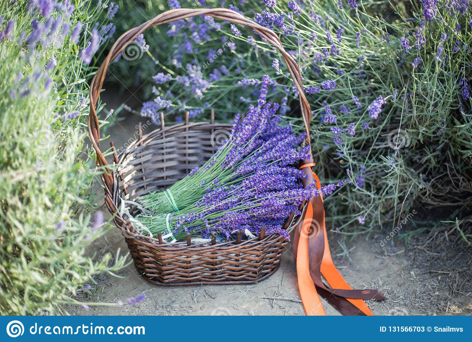 Καλάθι με lavender και εκλεκτής ποιότητας ένα ψαλίδι, Προβηγκία, Γαλλία