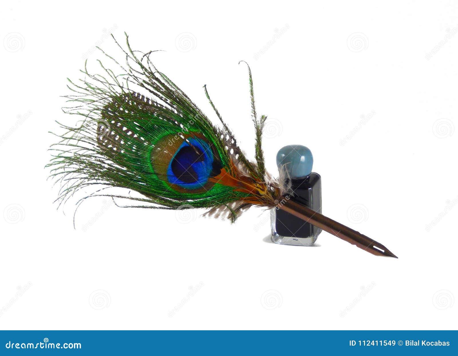 Καλάμι φτερών Peacock και inkwell απομονωμένος στο λευκό