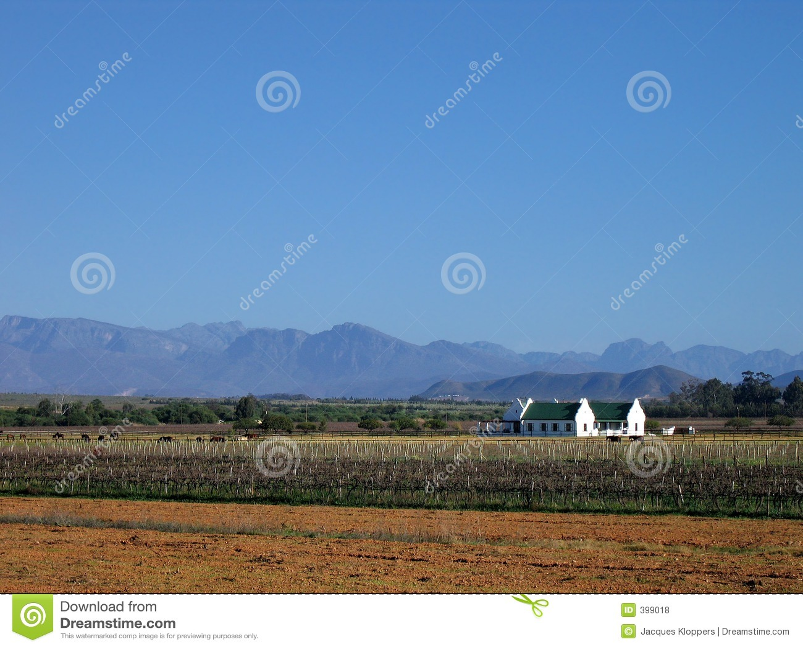 καλλιεργήσιμο έδαφος vinyard