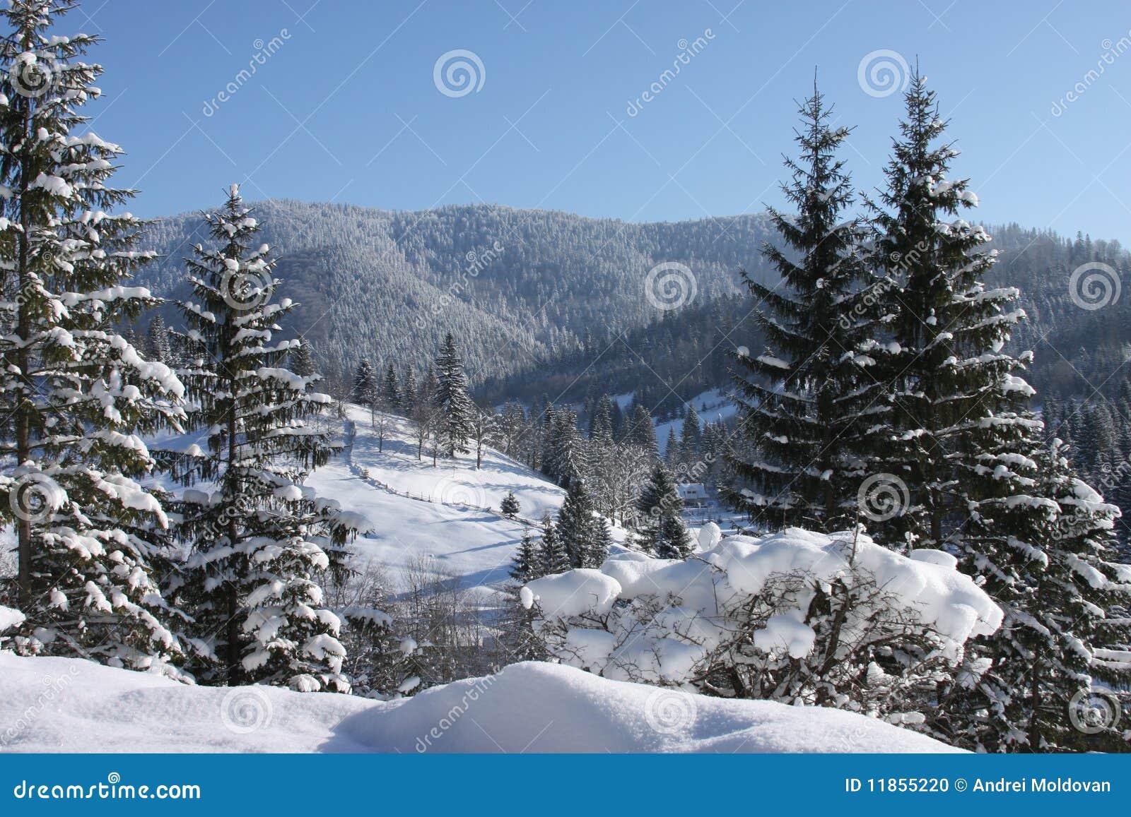 καλυμμένα δέντρα χιονιού β&