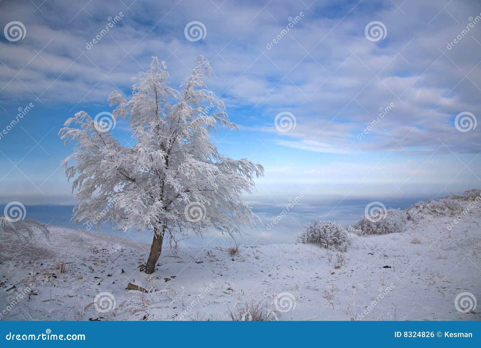 καλυμμένος χειμώνας δέντρ&