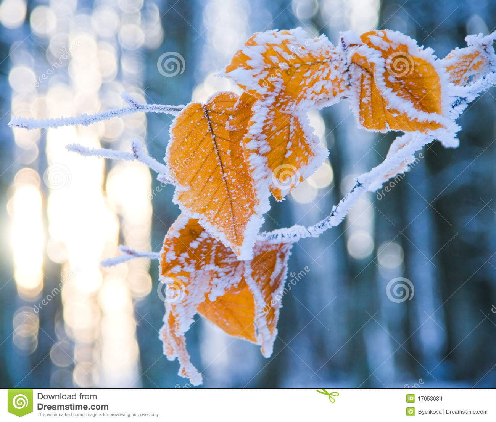 καλυμμένο χιόνι φύλλων